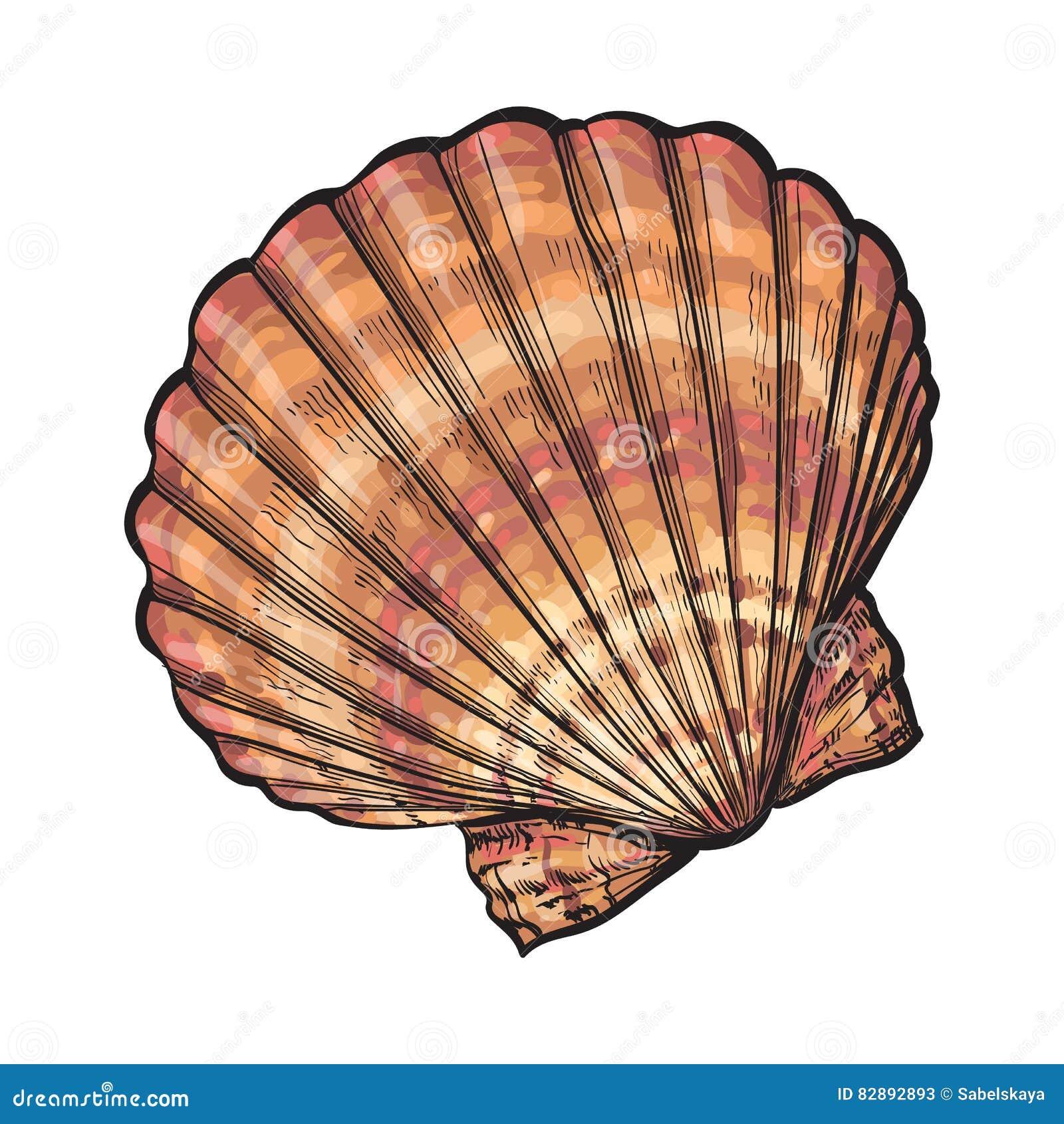 五颜六色的盐水扇贝海壳,剪影样式传染媒介例证