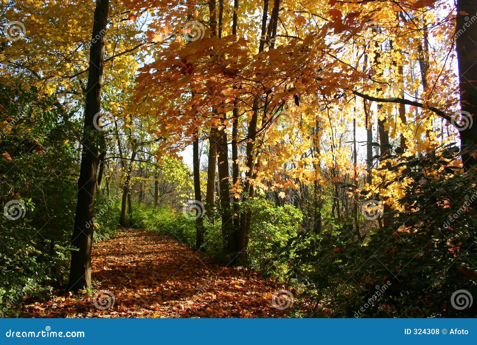 五颜六色的秋天路径