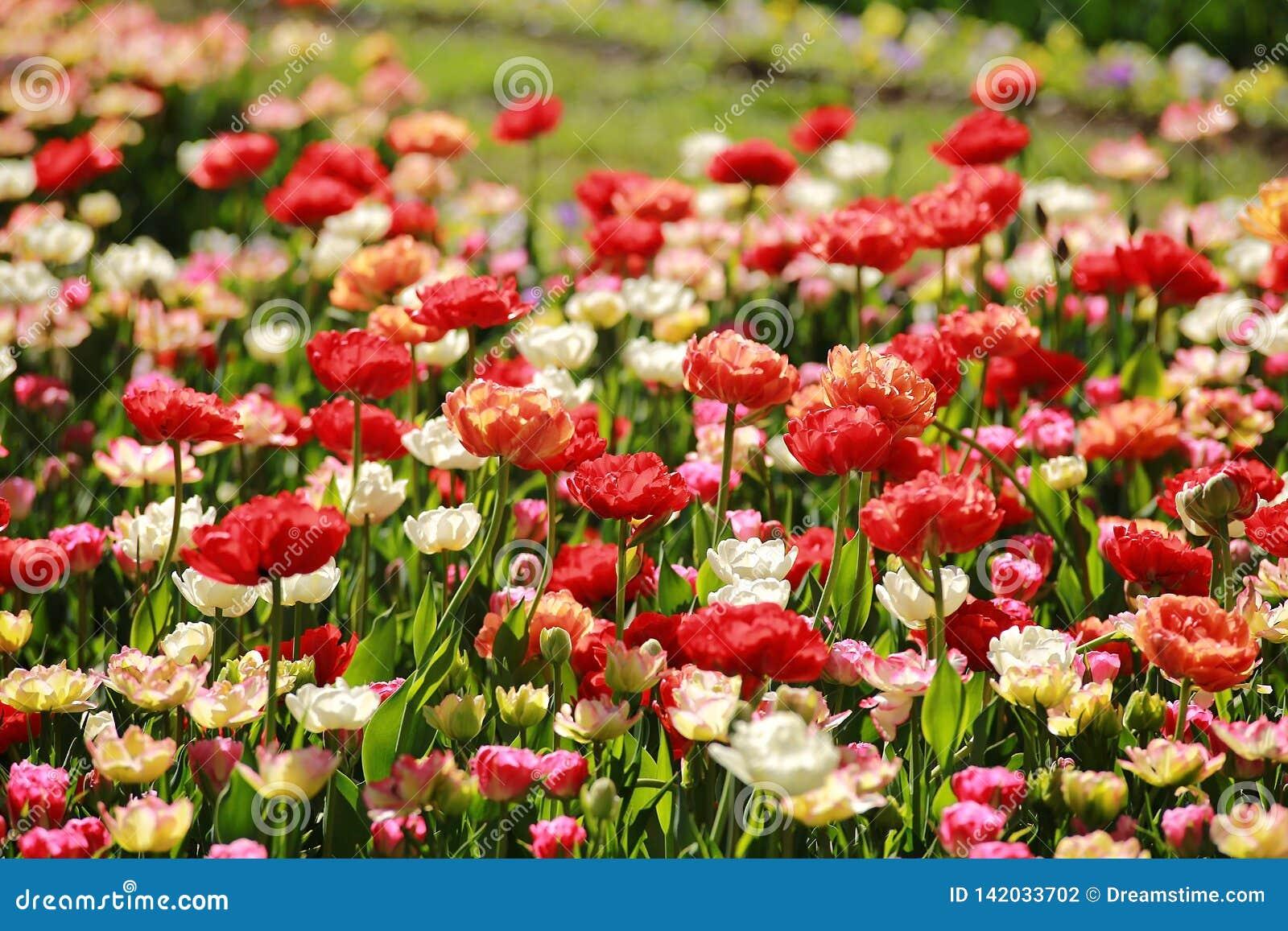 五颜六色的草甸花