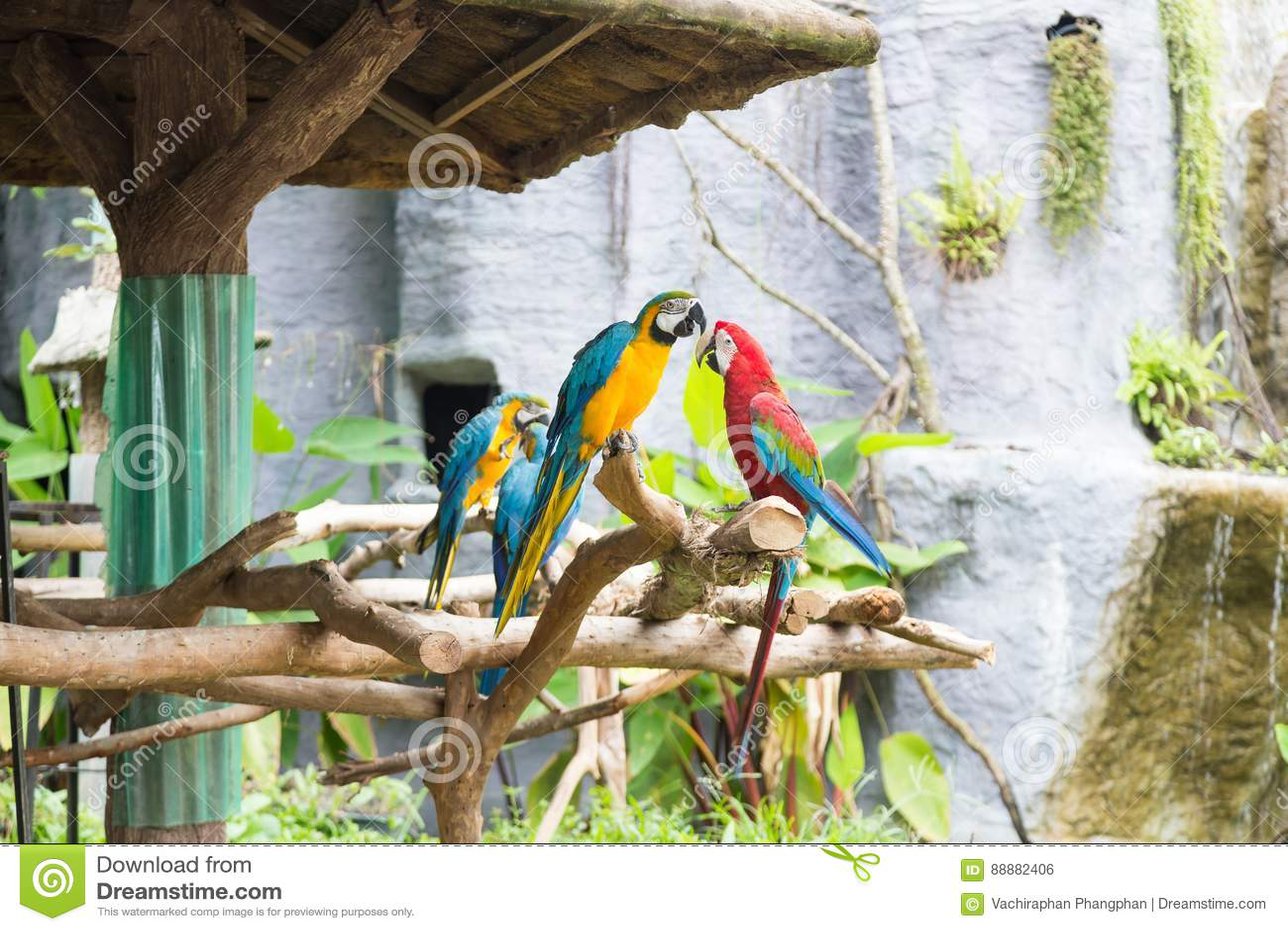 五颜六色的鹦鹉在分支