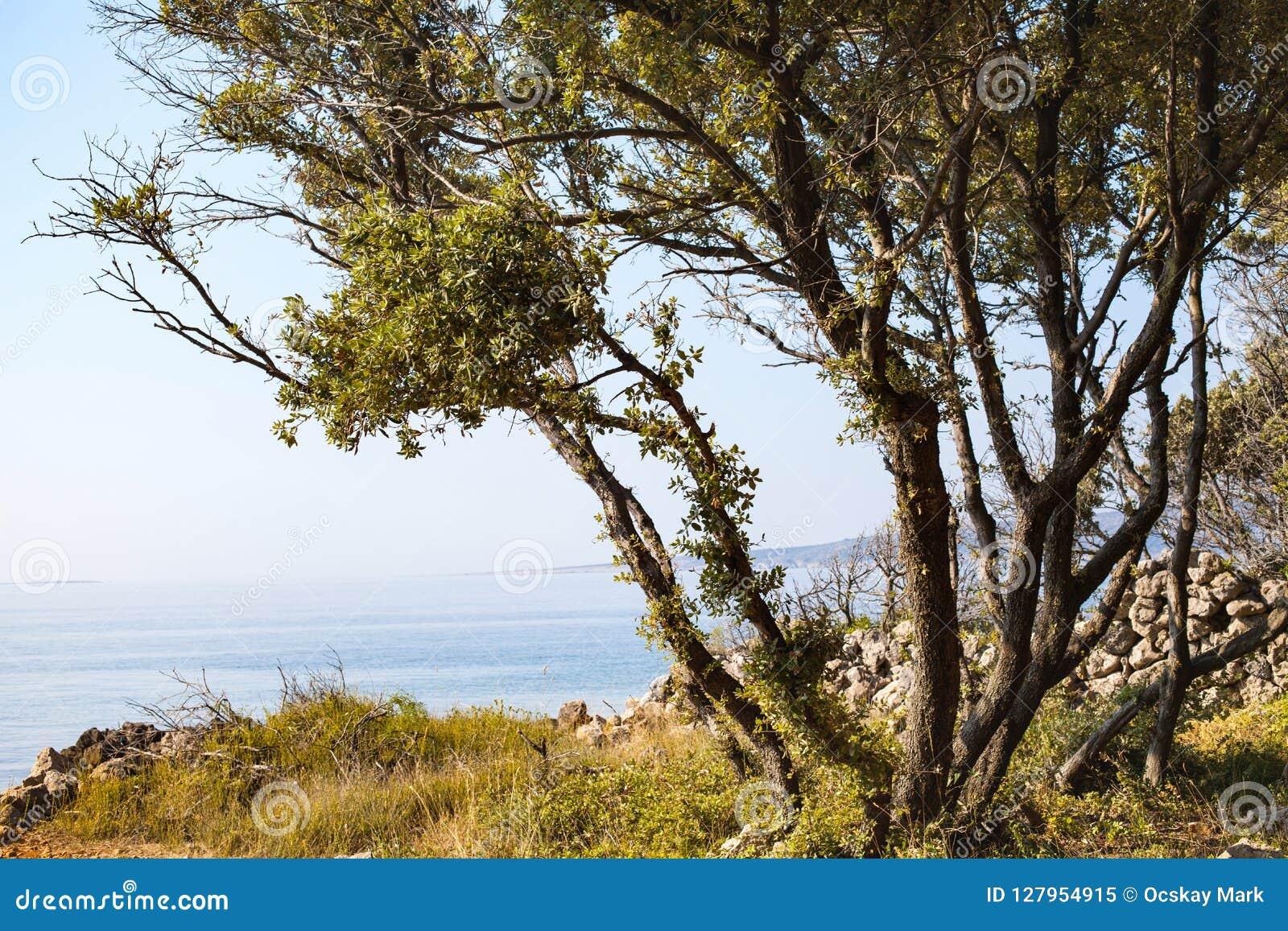 亚得里亚海的海滨, Krk,克罗地亚