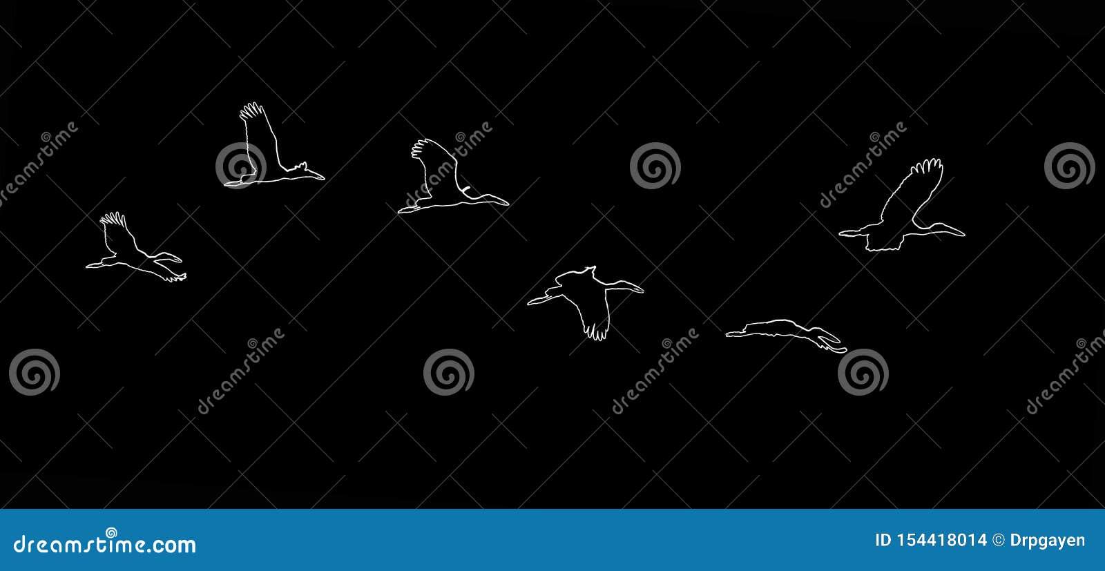 亚洲白色色的Open开帐单的鹳,Anastomus oscitans,在自然栖所野生生物鸟的印度白色鹳 ??