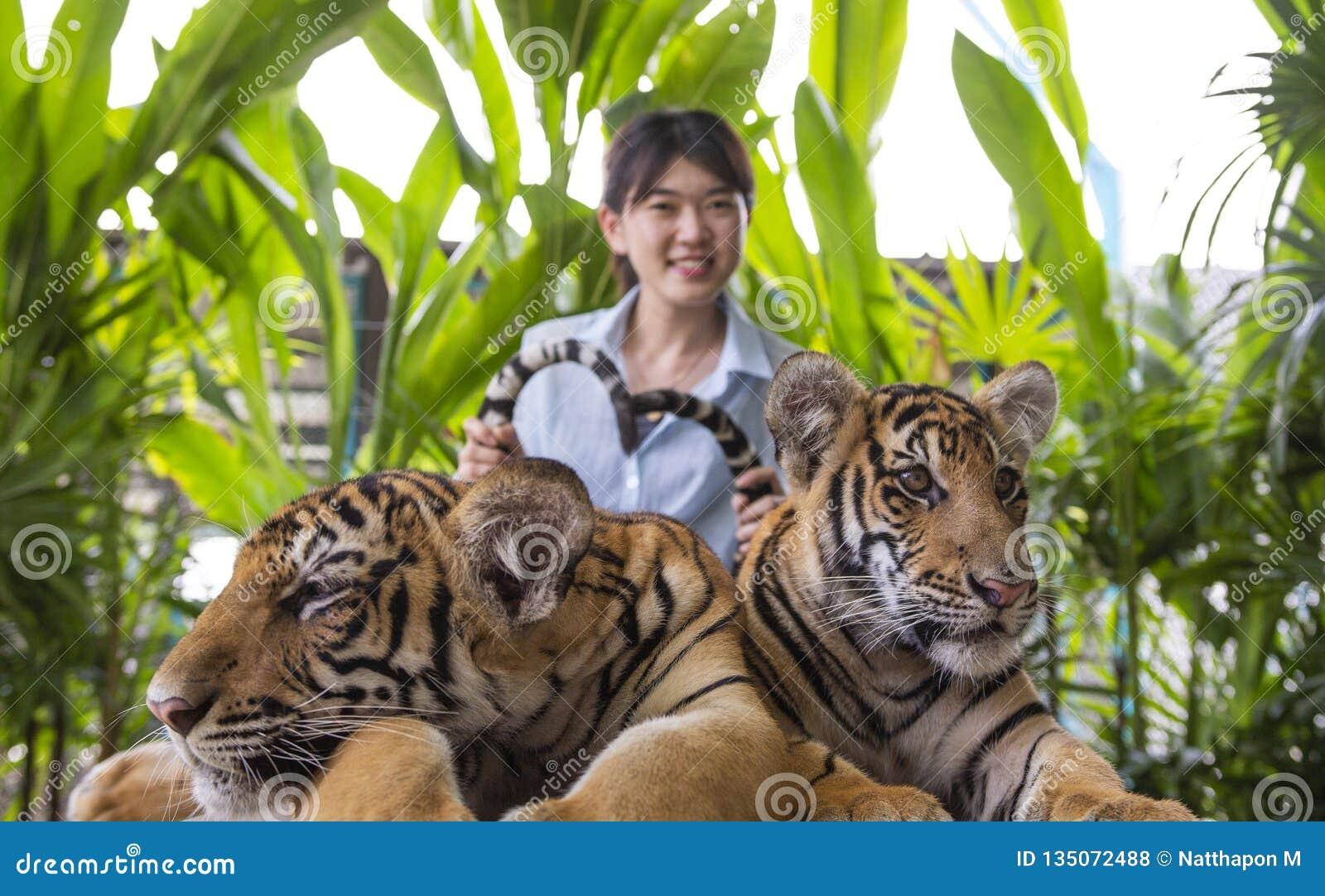 亚裔年轻女人捉住老虎尾巴