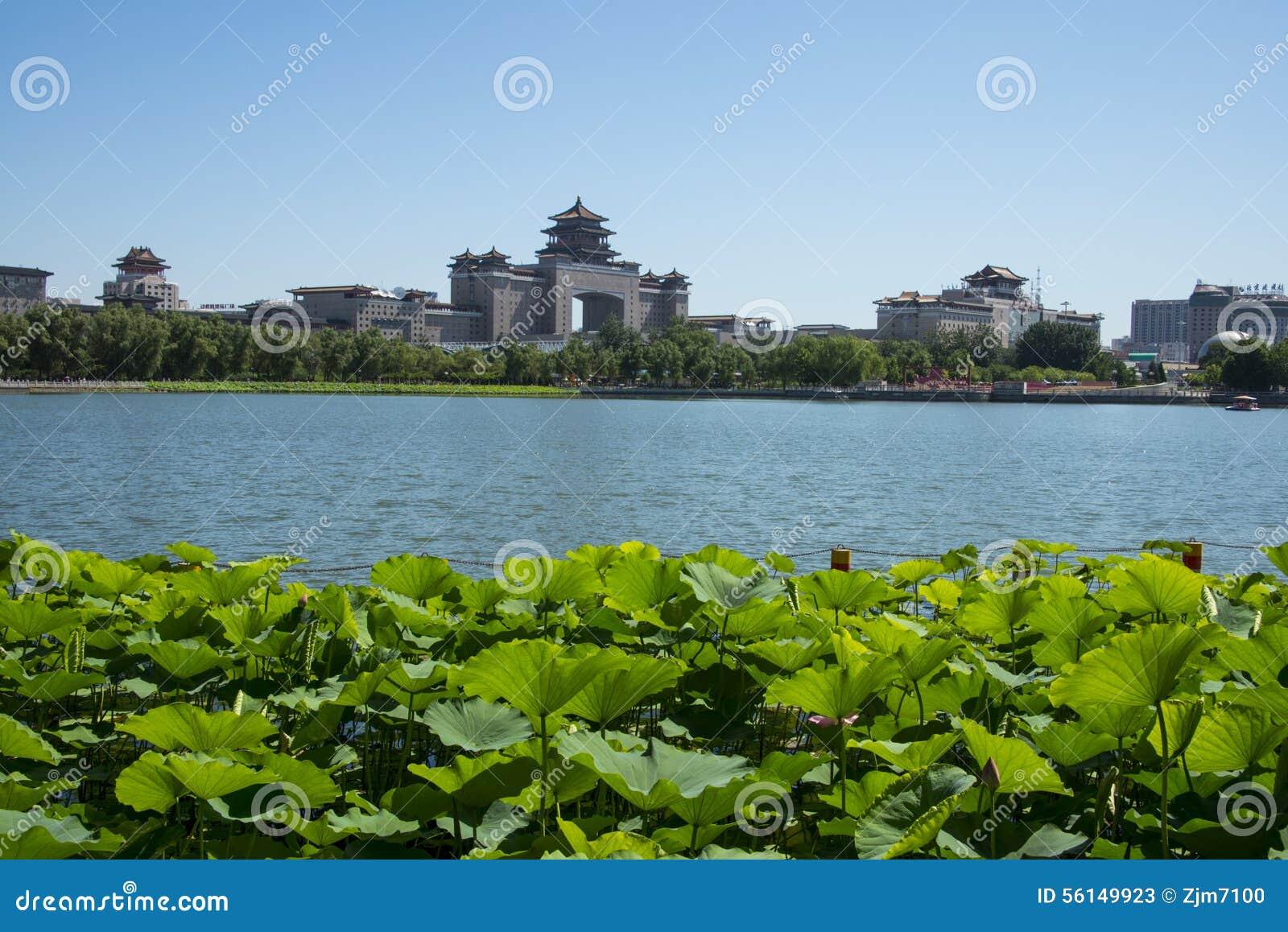 亚洲中国,北京,荷花池公园,荷花池,北京西站