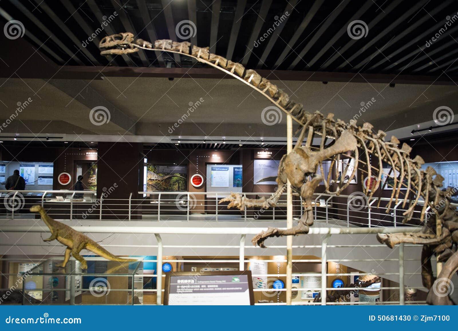 Download 亚洲人中国,北京,古老animalï ¼ ŒIndoor展览室博物馆, 编辑类图片 - 图片 包括有 科学, 陈列: 50681430