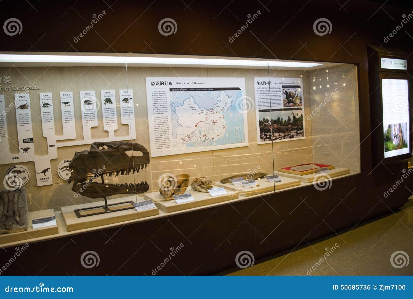 Download 亚洲人中国,北京,古老animalï ¼ ŒIndoor展览室博物馆, 编辑类照片 - 图片 包括有 聚会所, 博物馆: 50685736