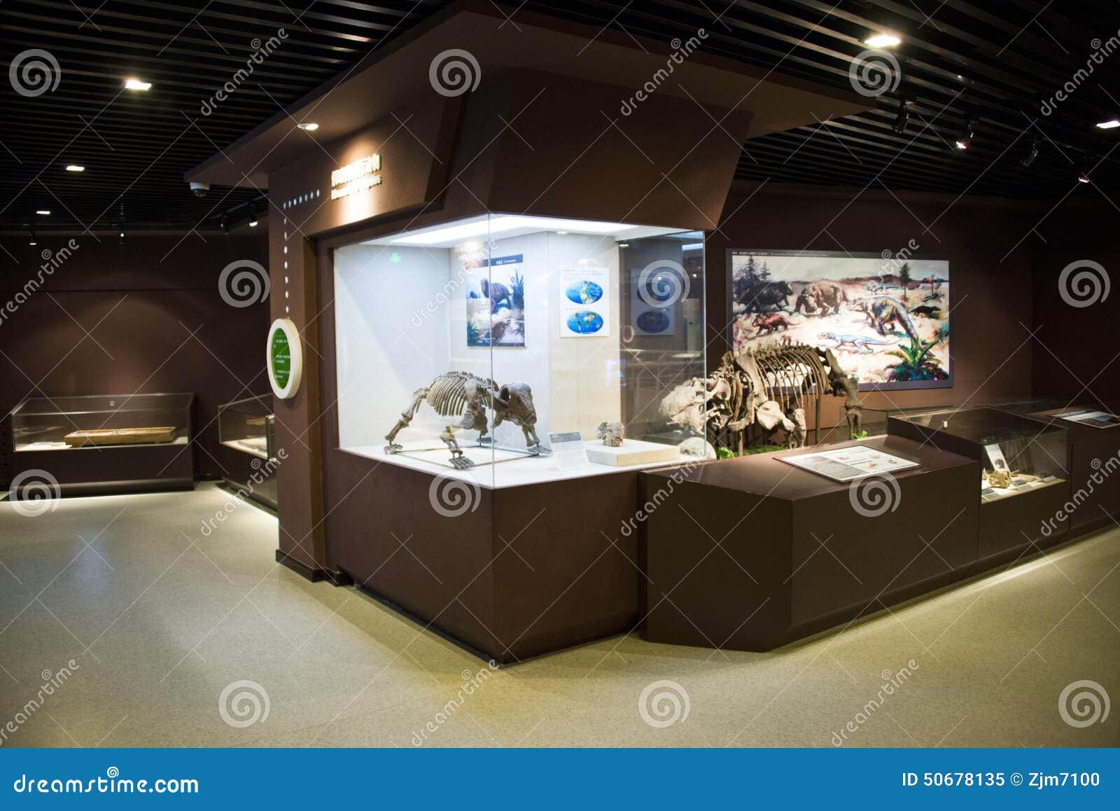 Download 亚洲人中国,北京,古老animalï ¼ ŒIndoor展览室,化石博物馆 编辑类图片 - 图片 包括有 现代, 汉语: 50678135