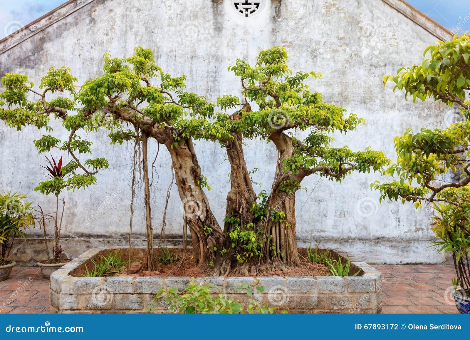 亚洲热带庭院, Ninh Binh,越南