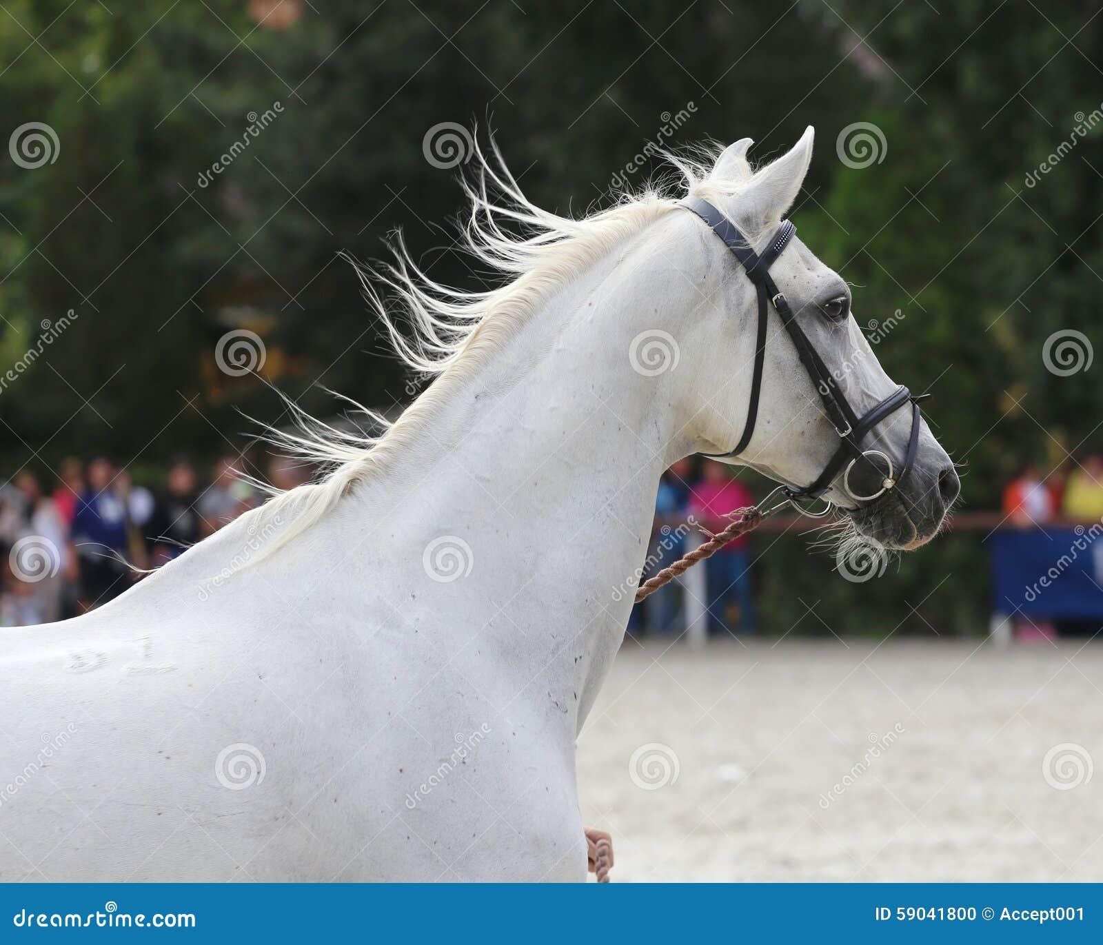 女人与公动物交配文章_交配动物者举行与辔的一匹马在马展示