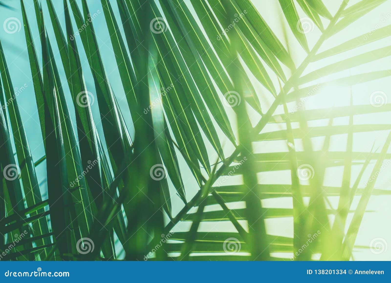 享受一个热带梦想