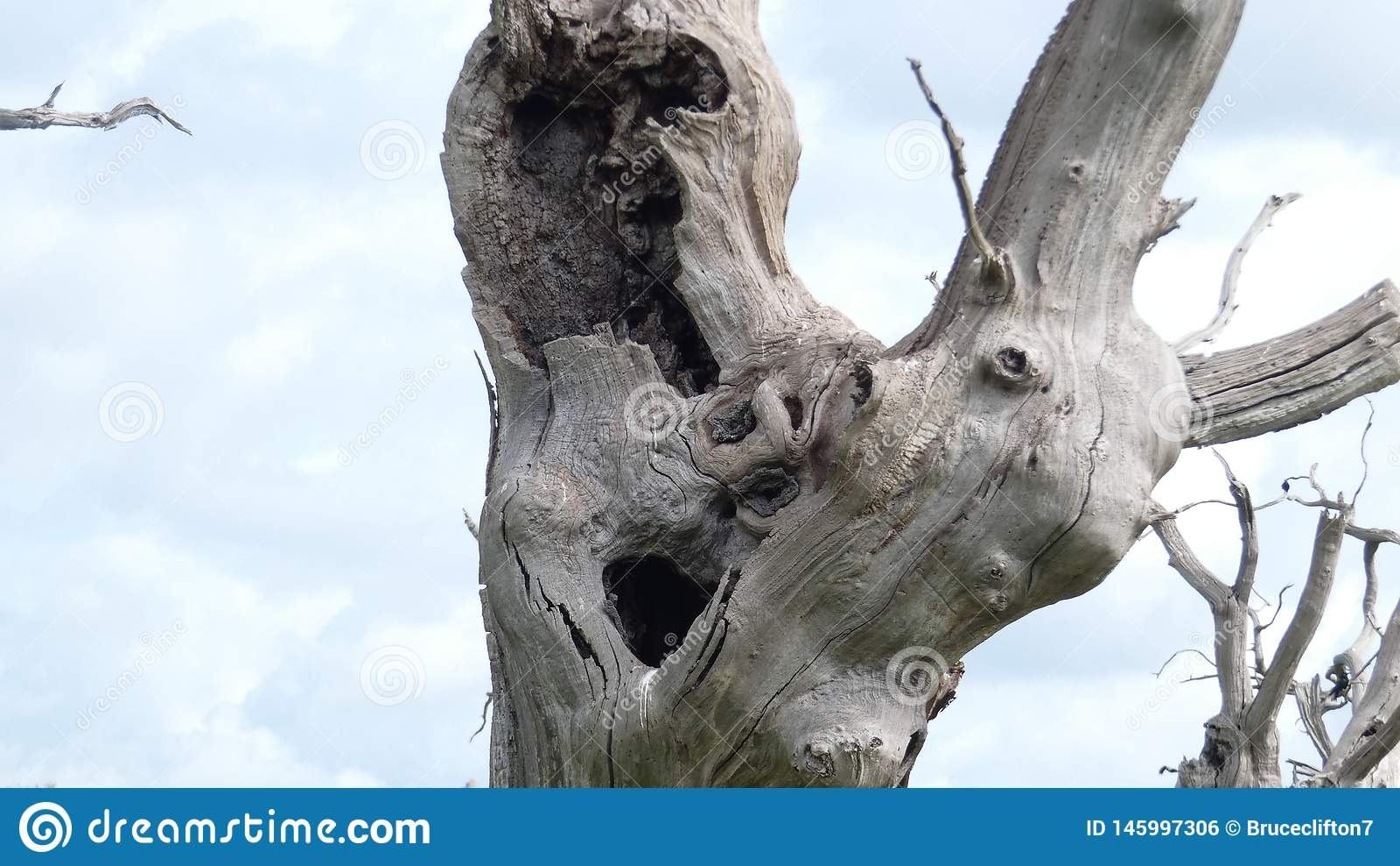 享受天的橡树树精古老化石森林庆祝2000年13