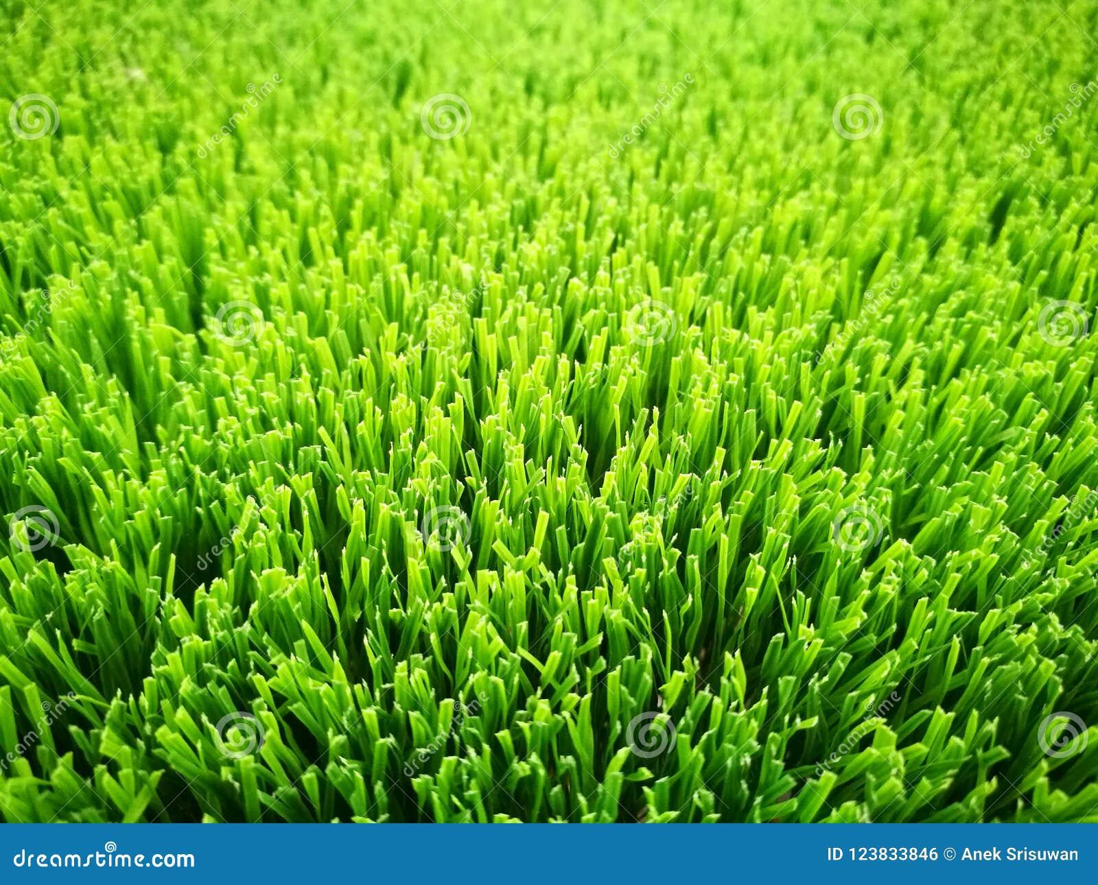 人为草特写镜头绿色