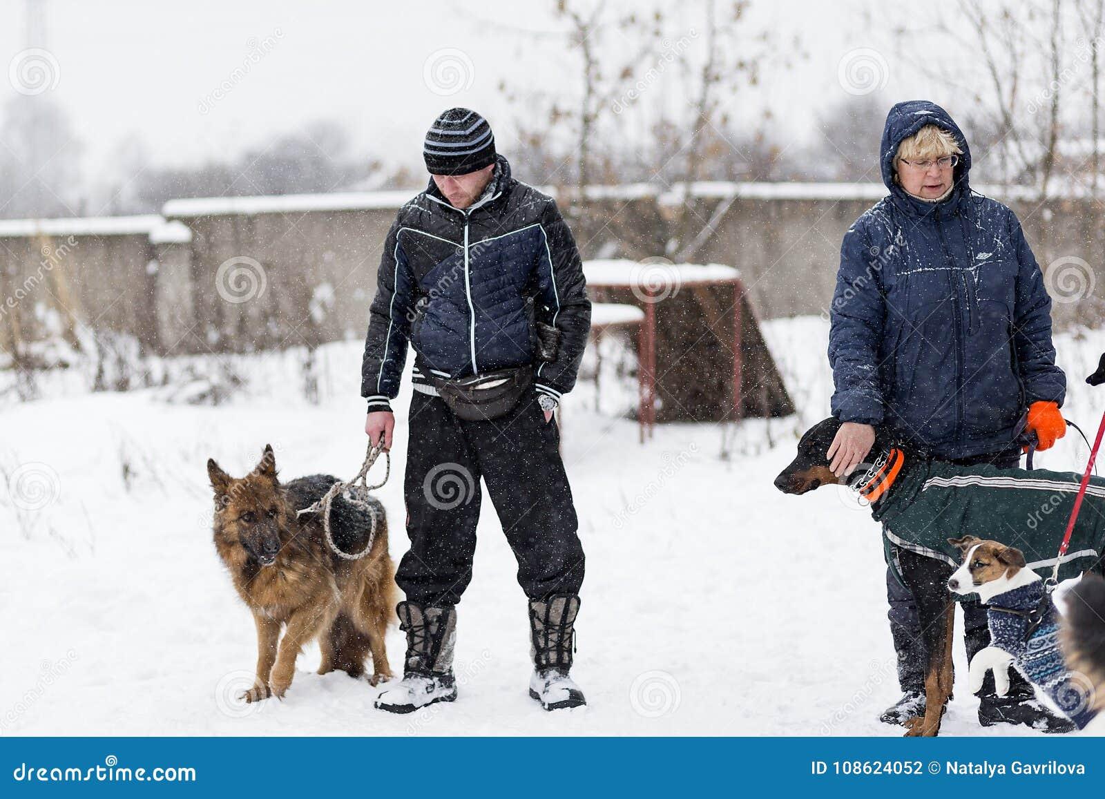 人们在冬天遛他们的狗