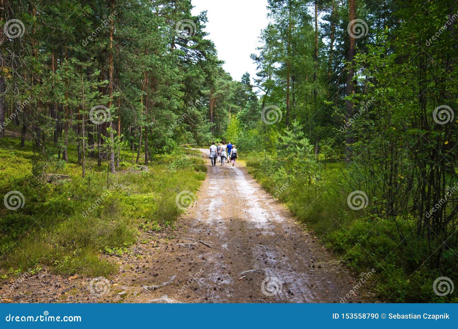 人们在Roztocze波兰森林里走