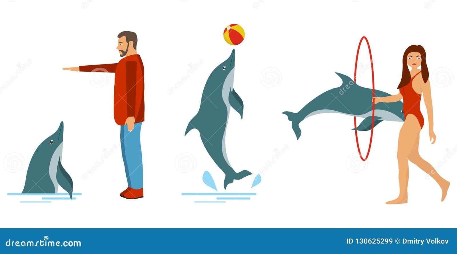 人们训练海豚 海豚展示 人们使用与海豚