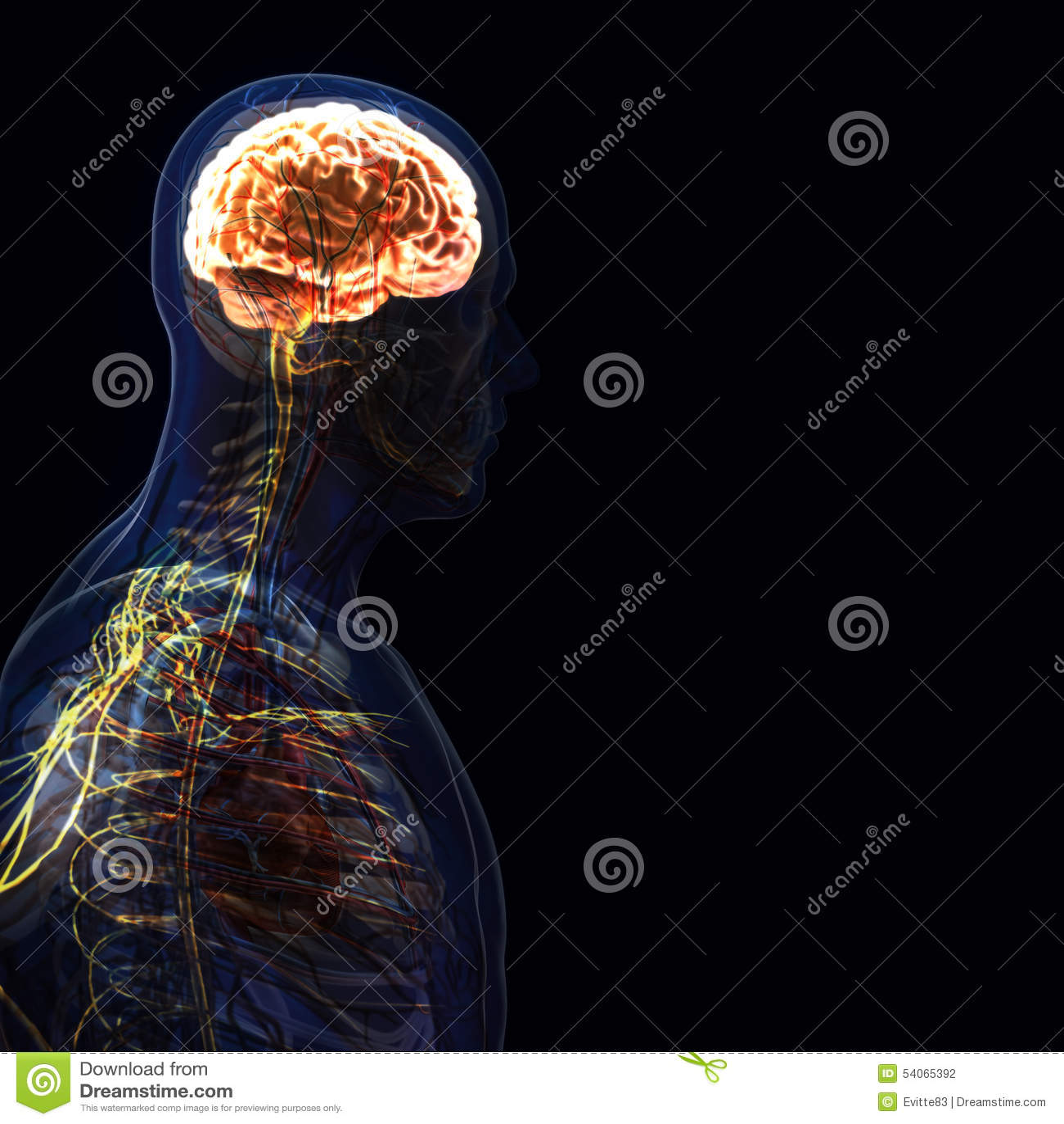 人体(器官)由在黑背景的X-射线