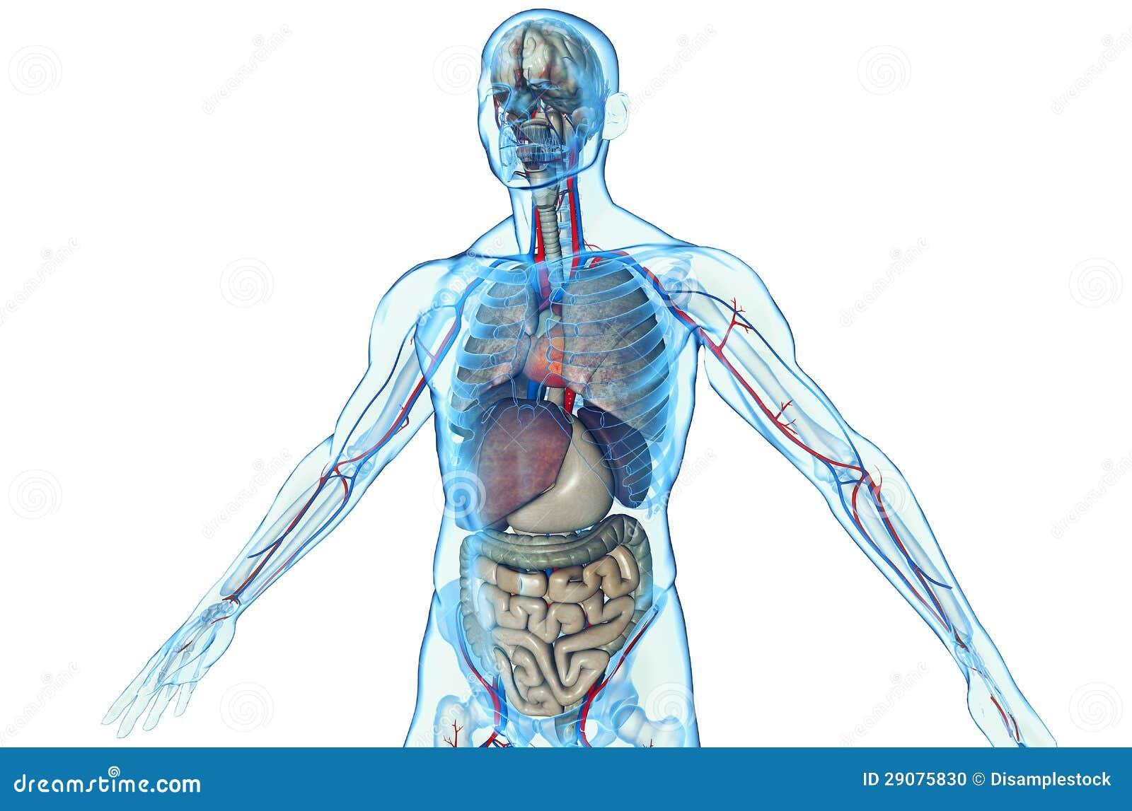 人力解剖学