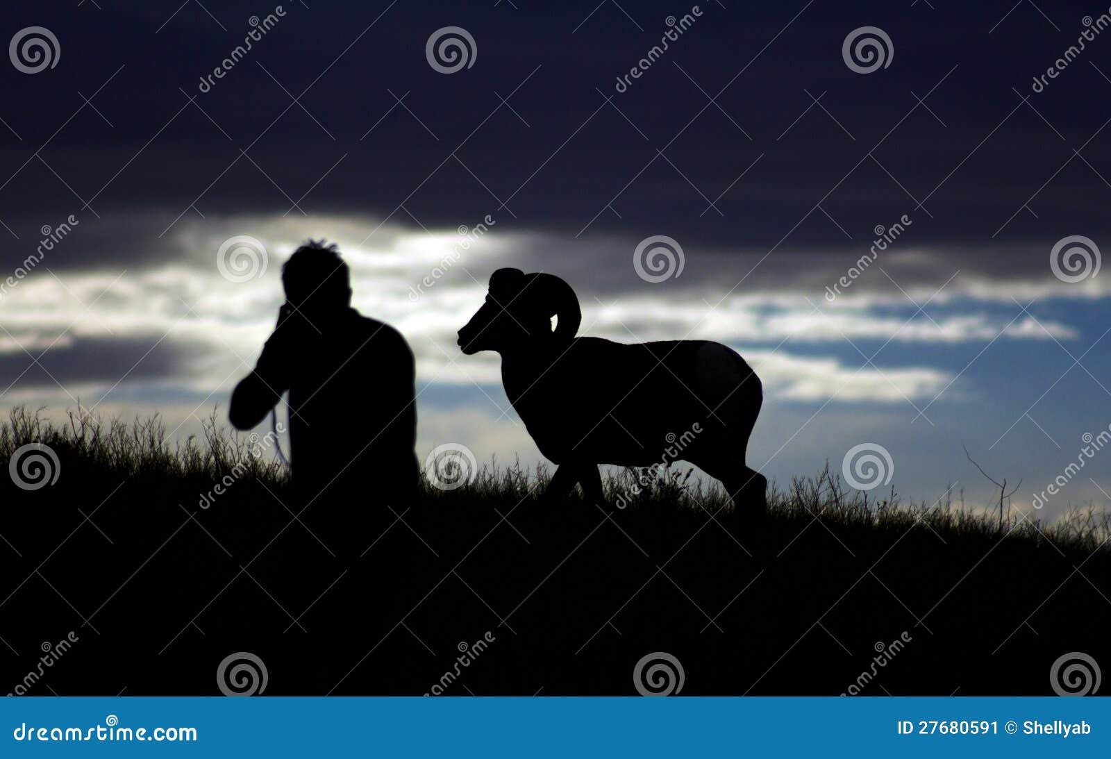 人和大角野绵羊