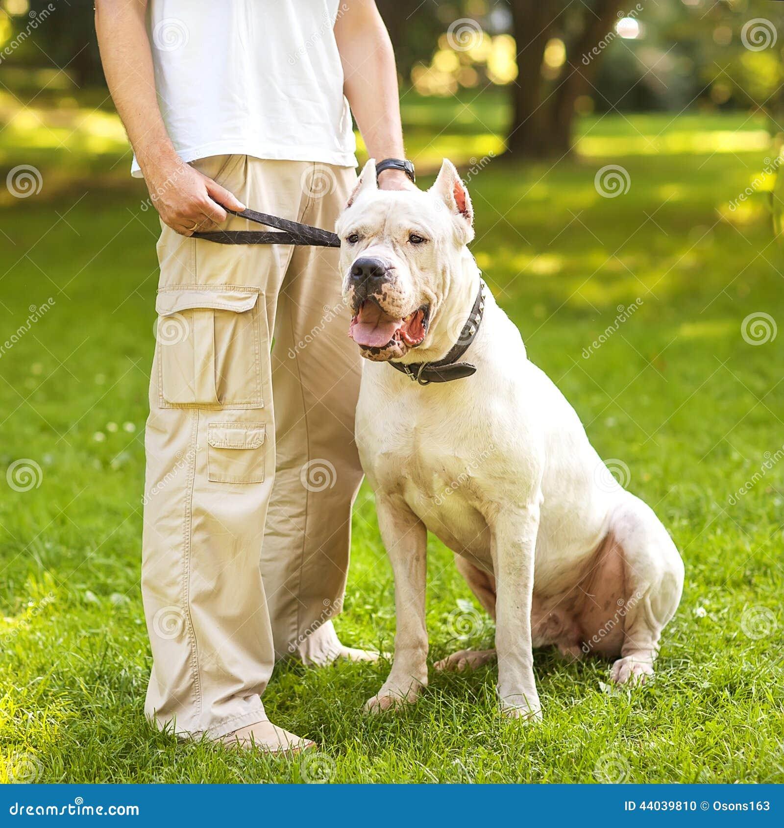 人和狗性交色情片_人和狗 库存照片 - 图片: 44039810