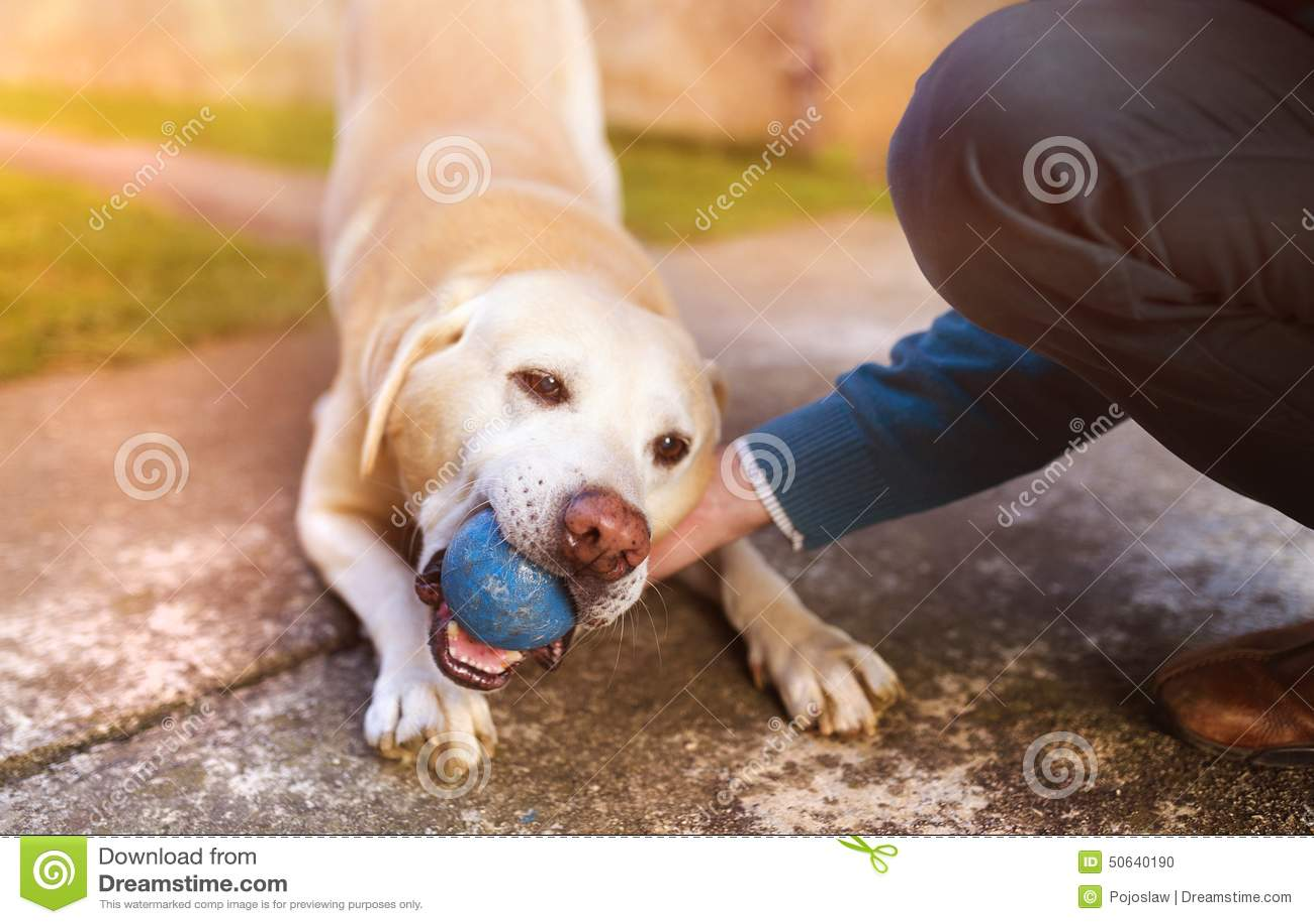 人和狗性交色情片_人和狗 库存照片 - 图片: 50640190