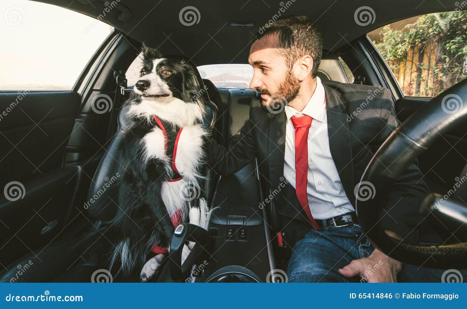 人在似犬竞争前刺激他的狗