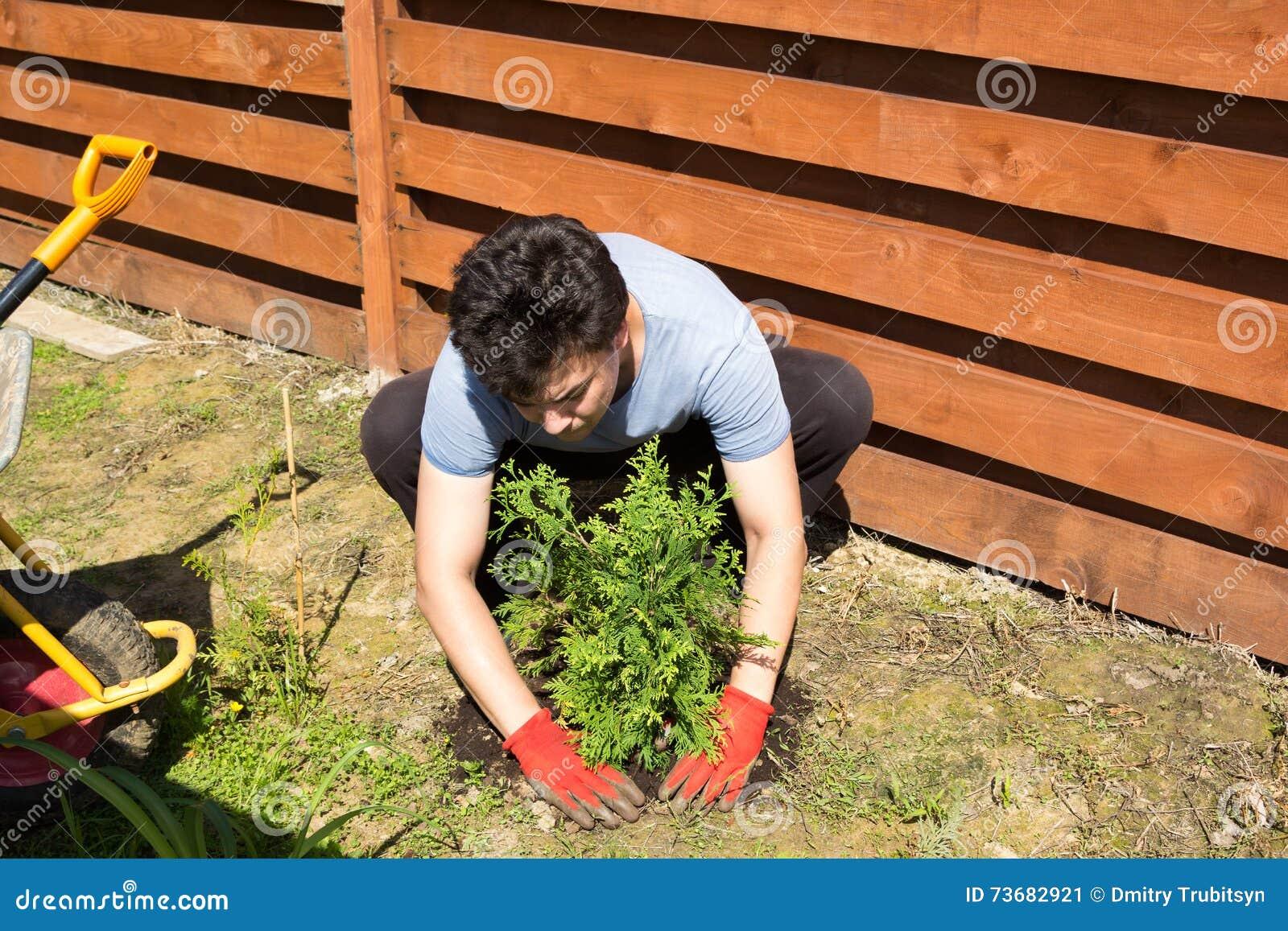 人在庭院里种植金钟柏