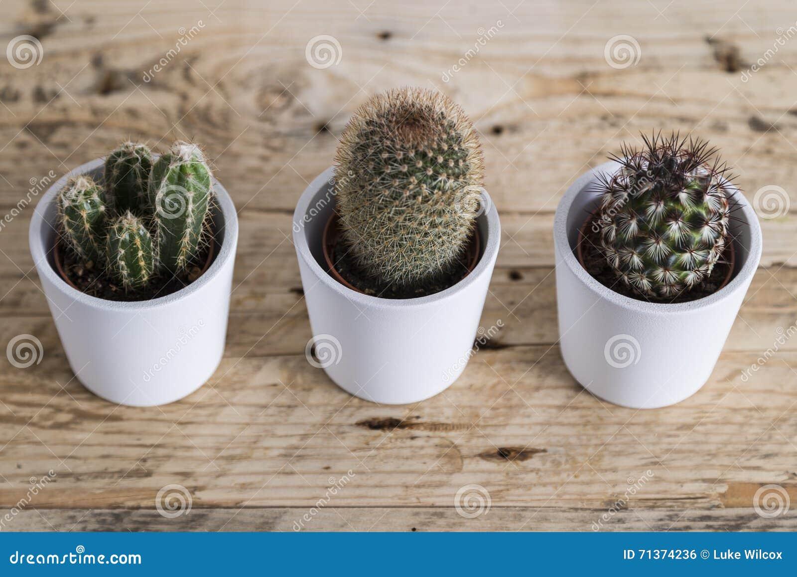 仙人掌植物三重奏