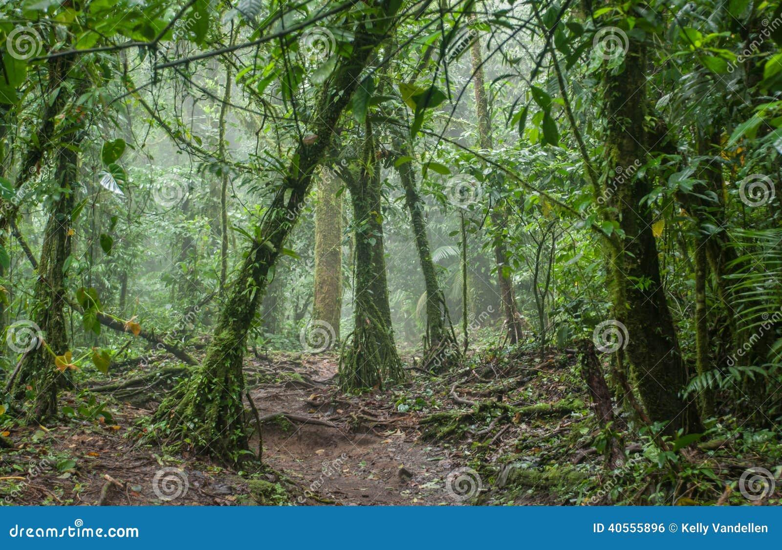 令人毛骨悚然的密林在哥斯达黎加