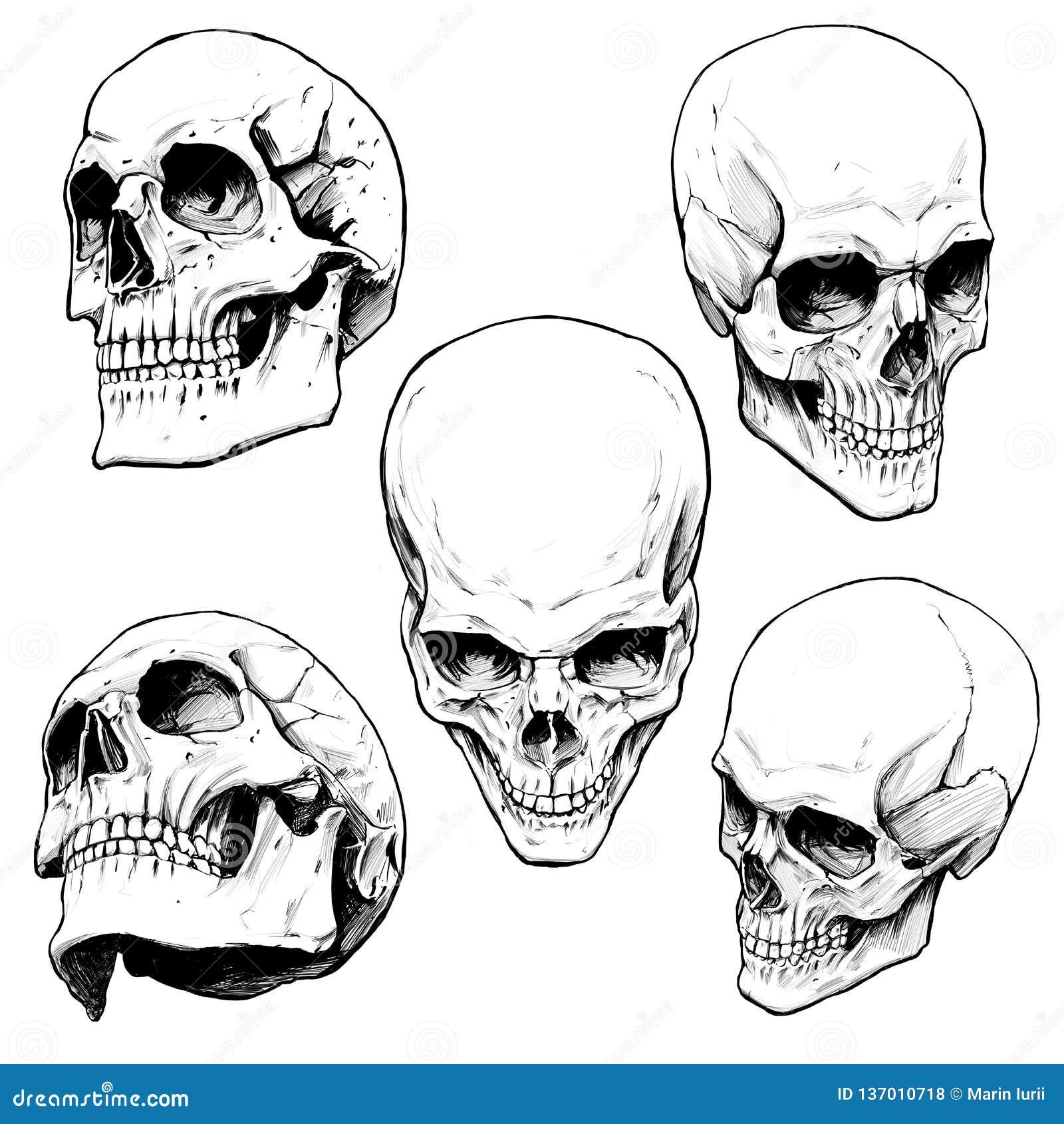 人的头骨的汇集