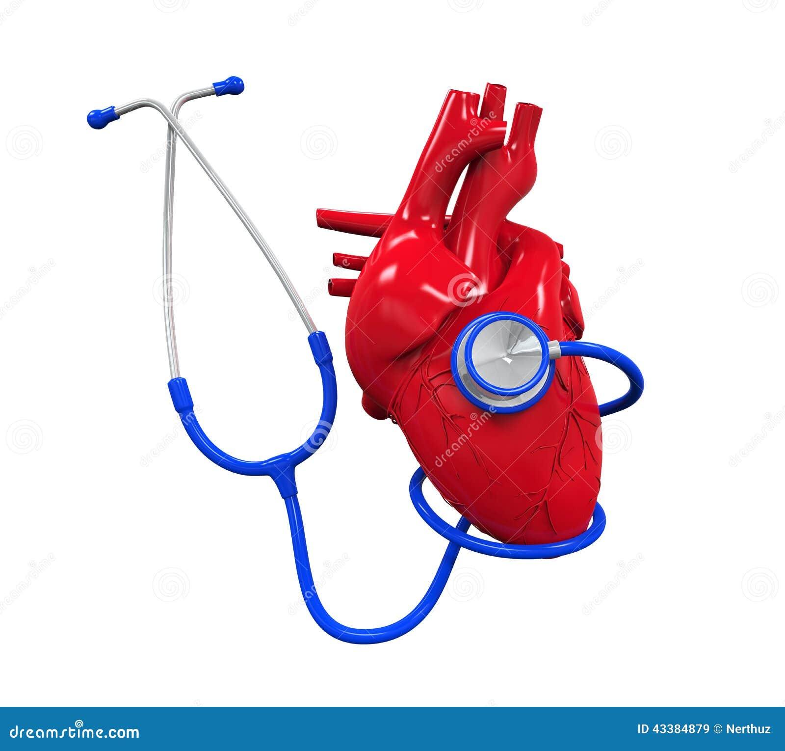 人的在白色背景隔绝的心脏和听诊器 3d回报.