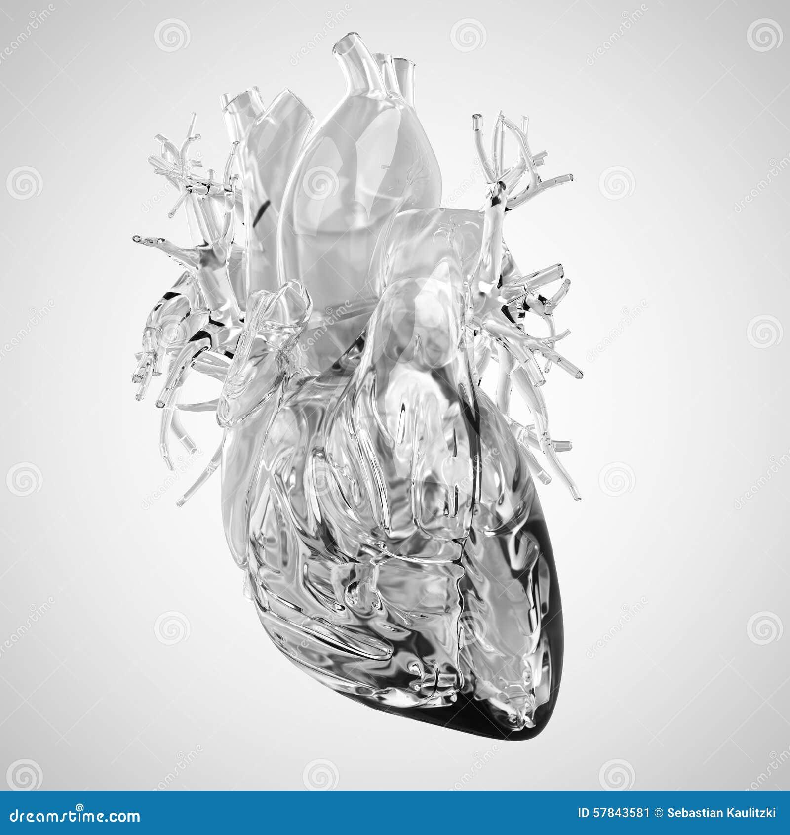 库存例证: 人的心脏由玻璃制成图片