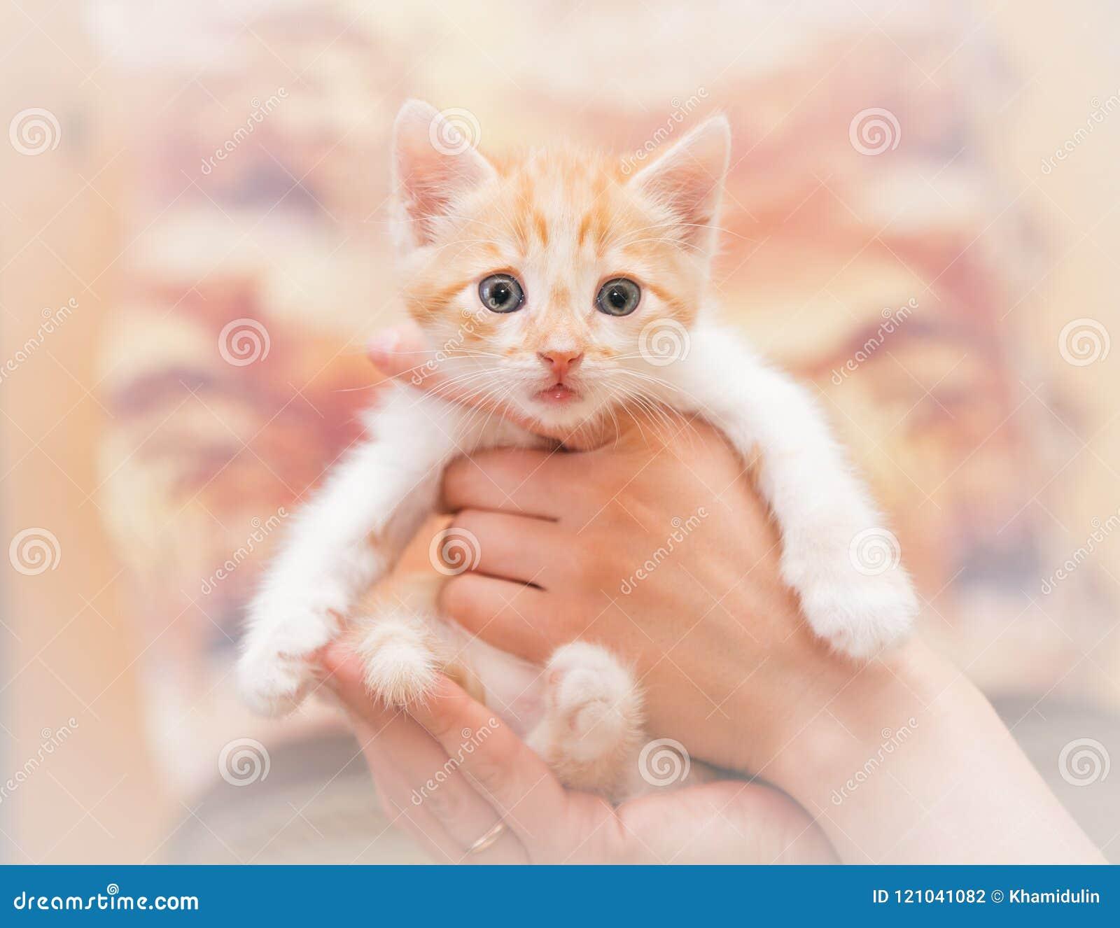 人的手小心地拿着一只小小猫