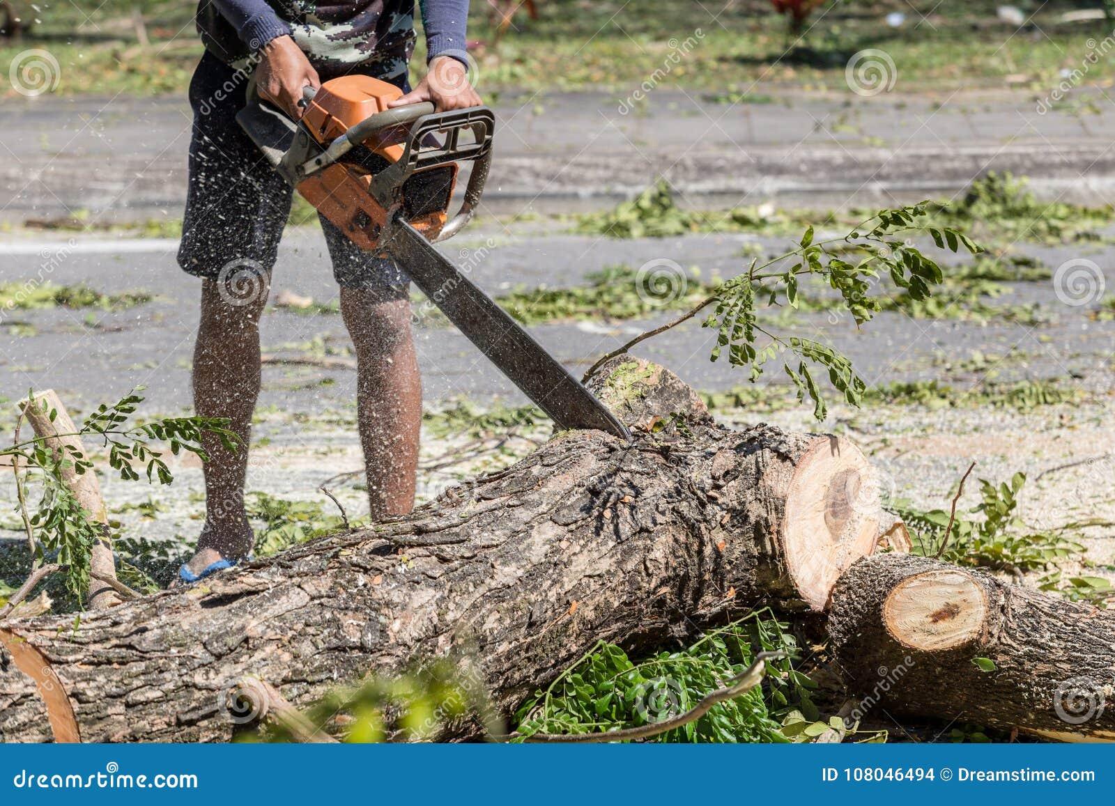 梦到别人砍树干上的叉