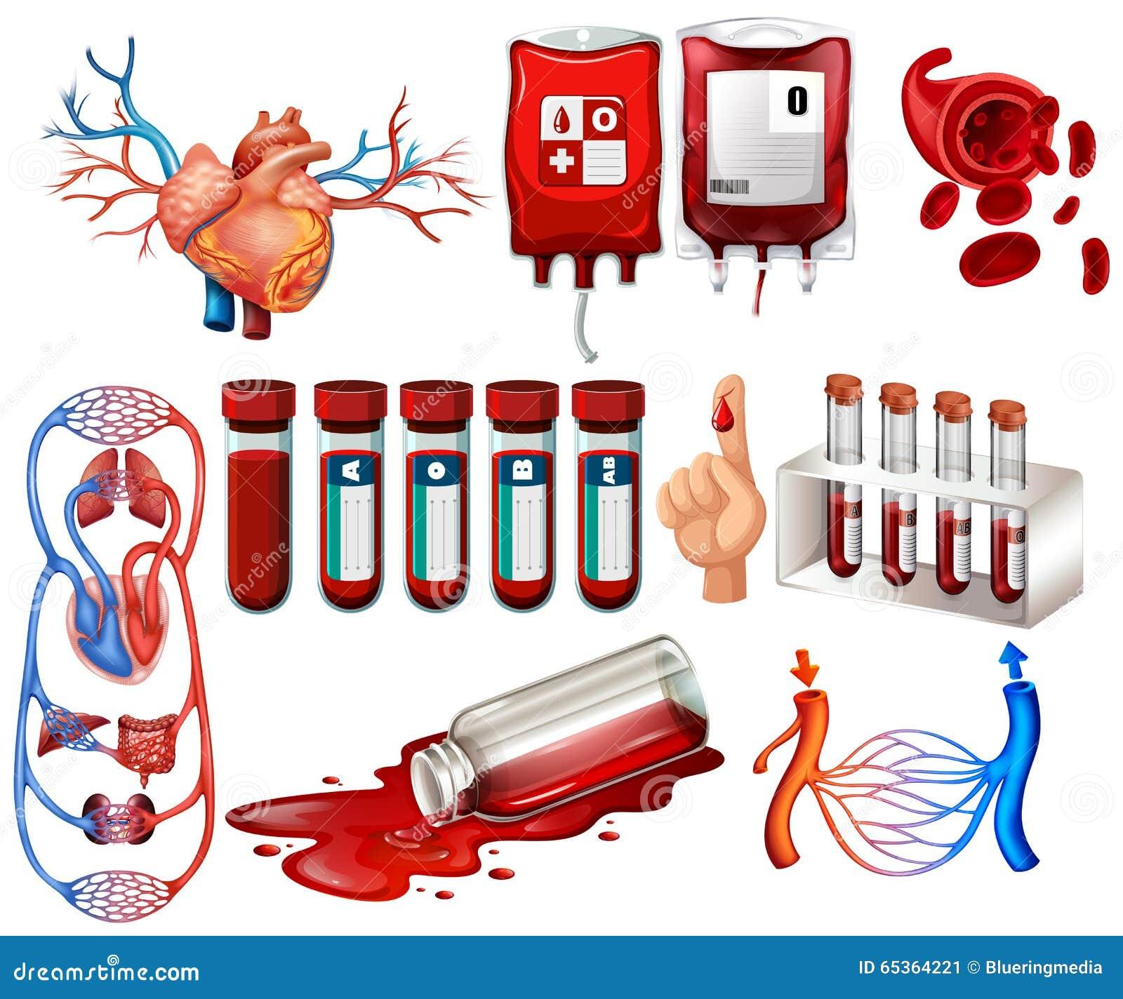 人血和器官