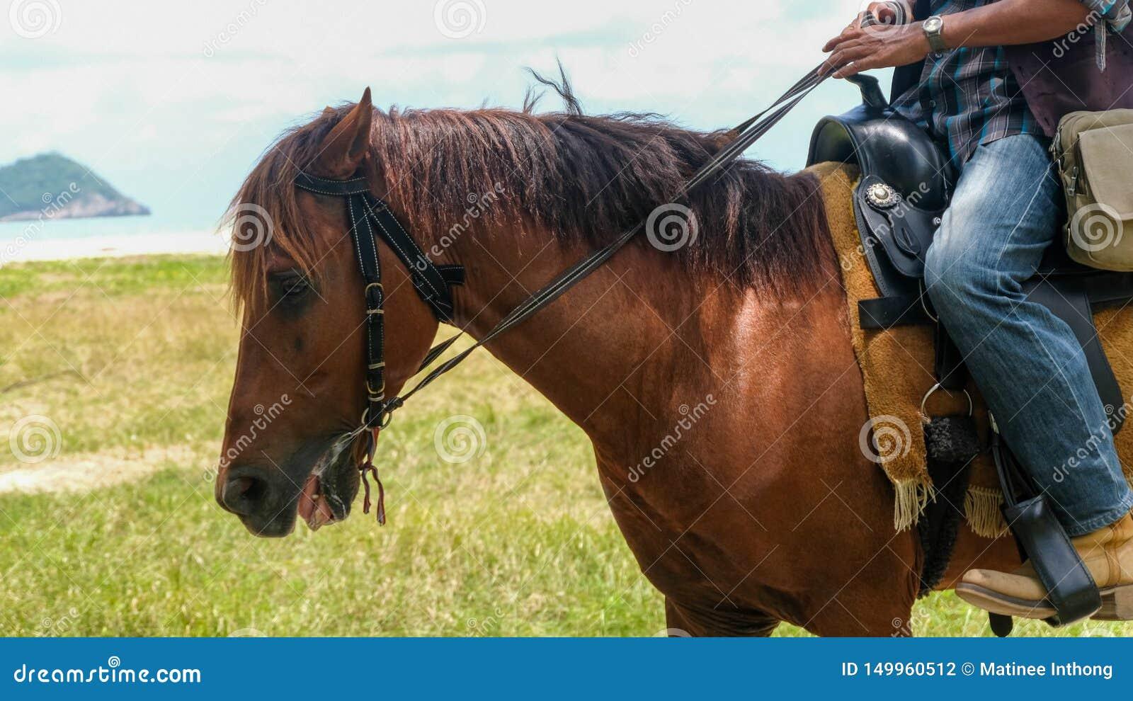 人骑马在海滩的褐色马