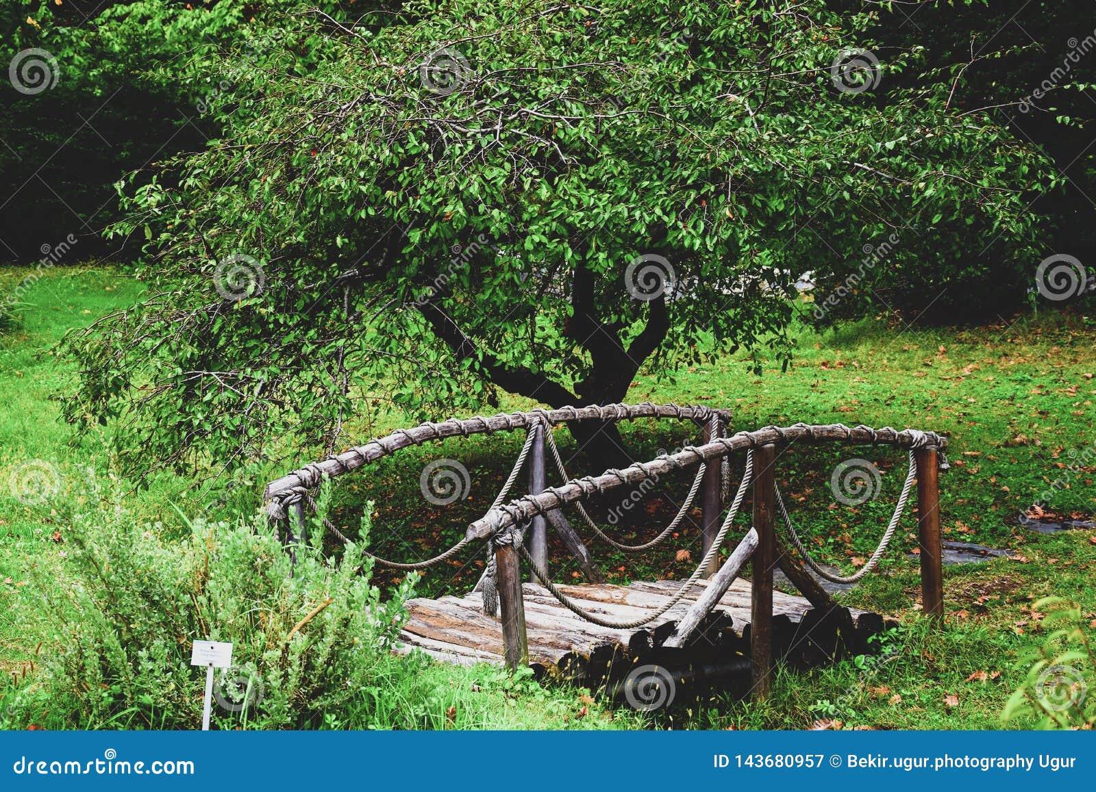 从一棵树的桥梁与扶手栏杆