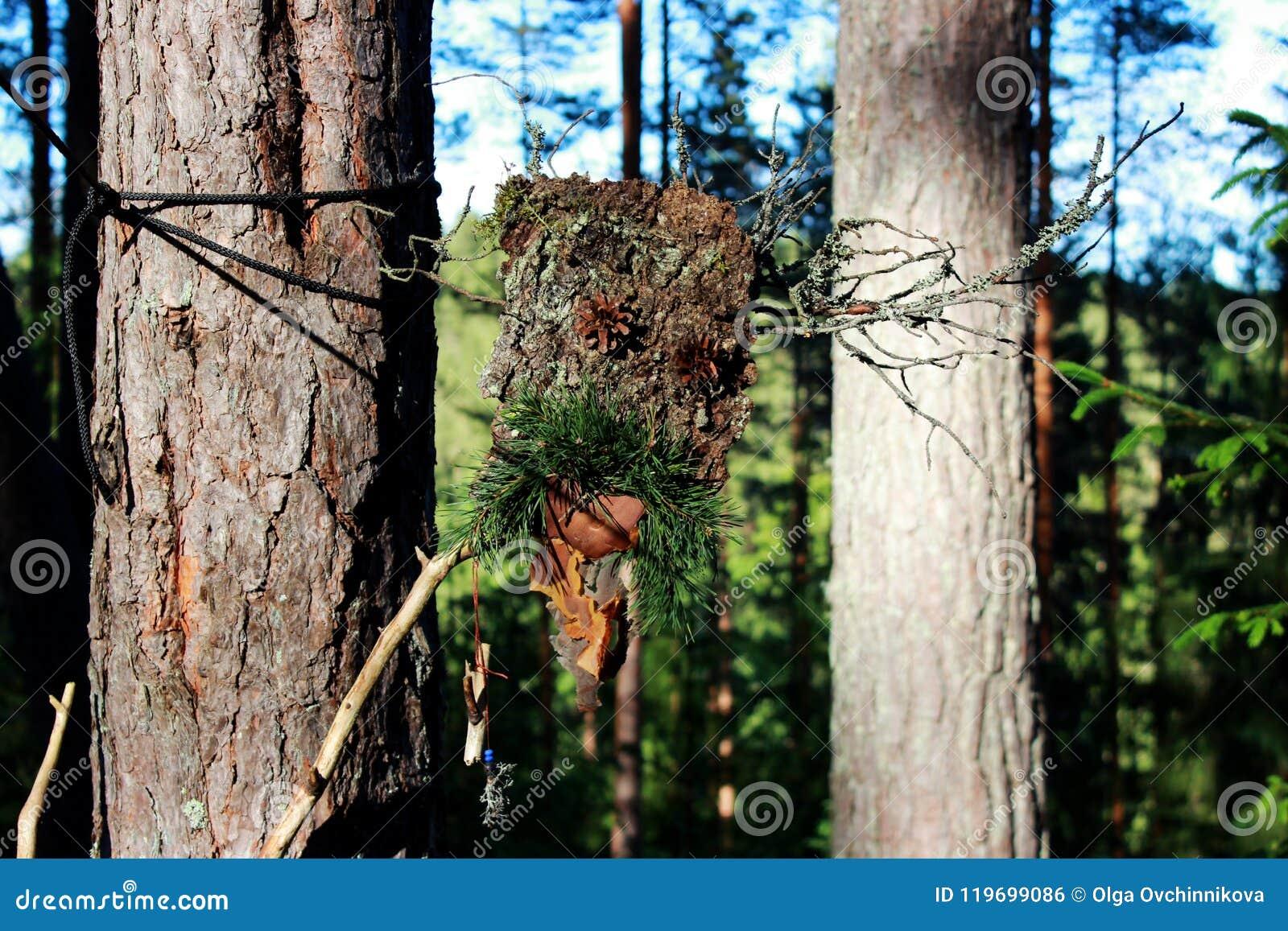 从吠声棍子和杉木锥体的一尊森林神象做哄骗精神 异端