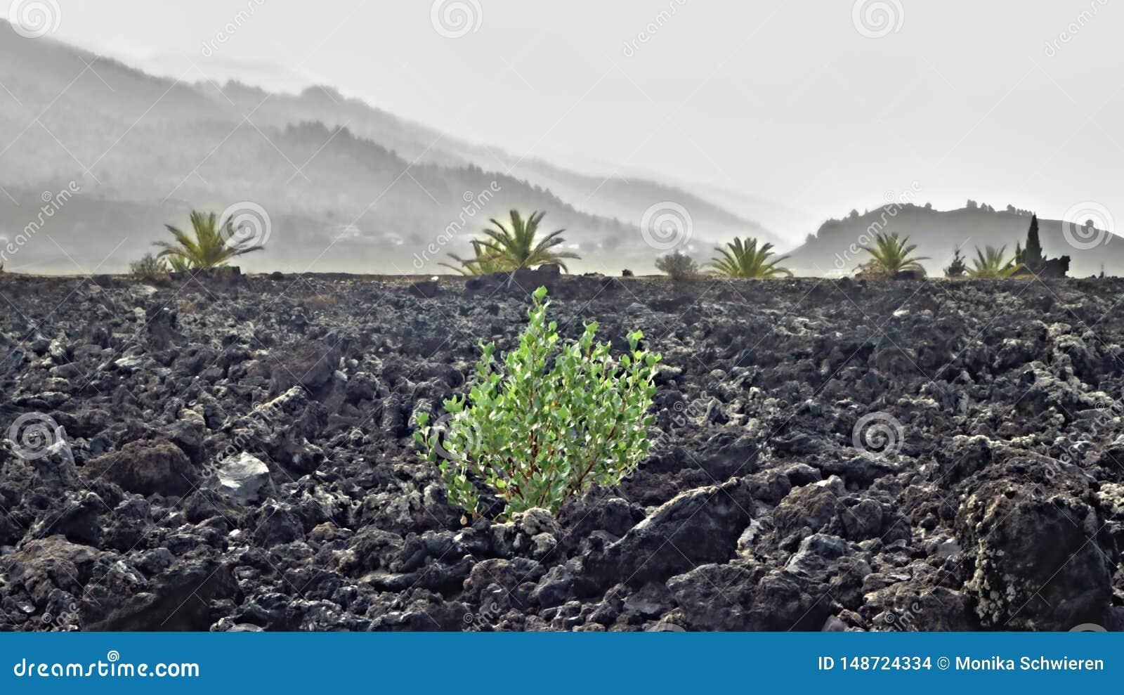 从最后火山爆发的一个大熔岩石scree风景在加那利群岛的西部的拉帕尔玛岛