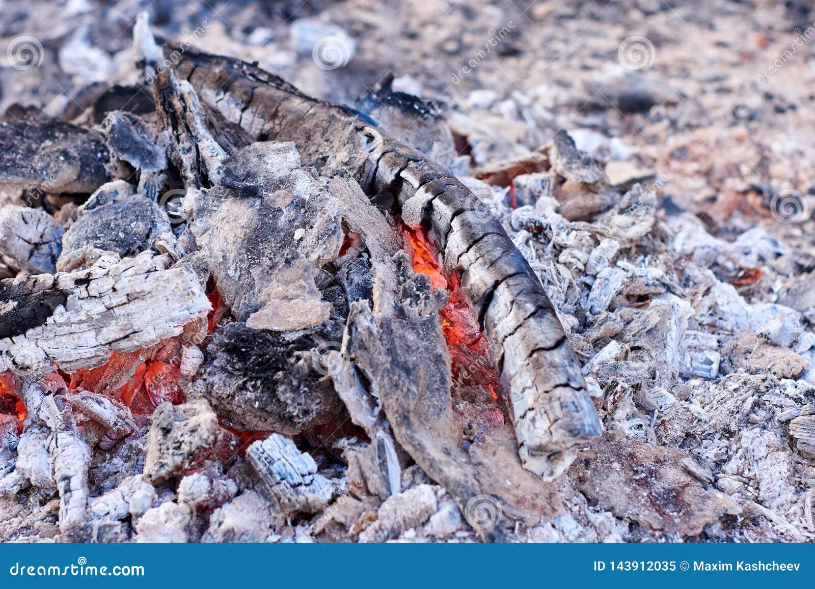 从树的煤炭和在火的橙色火焰