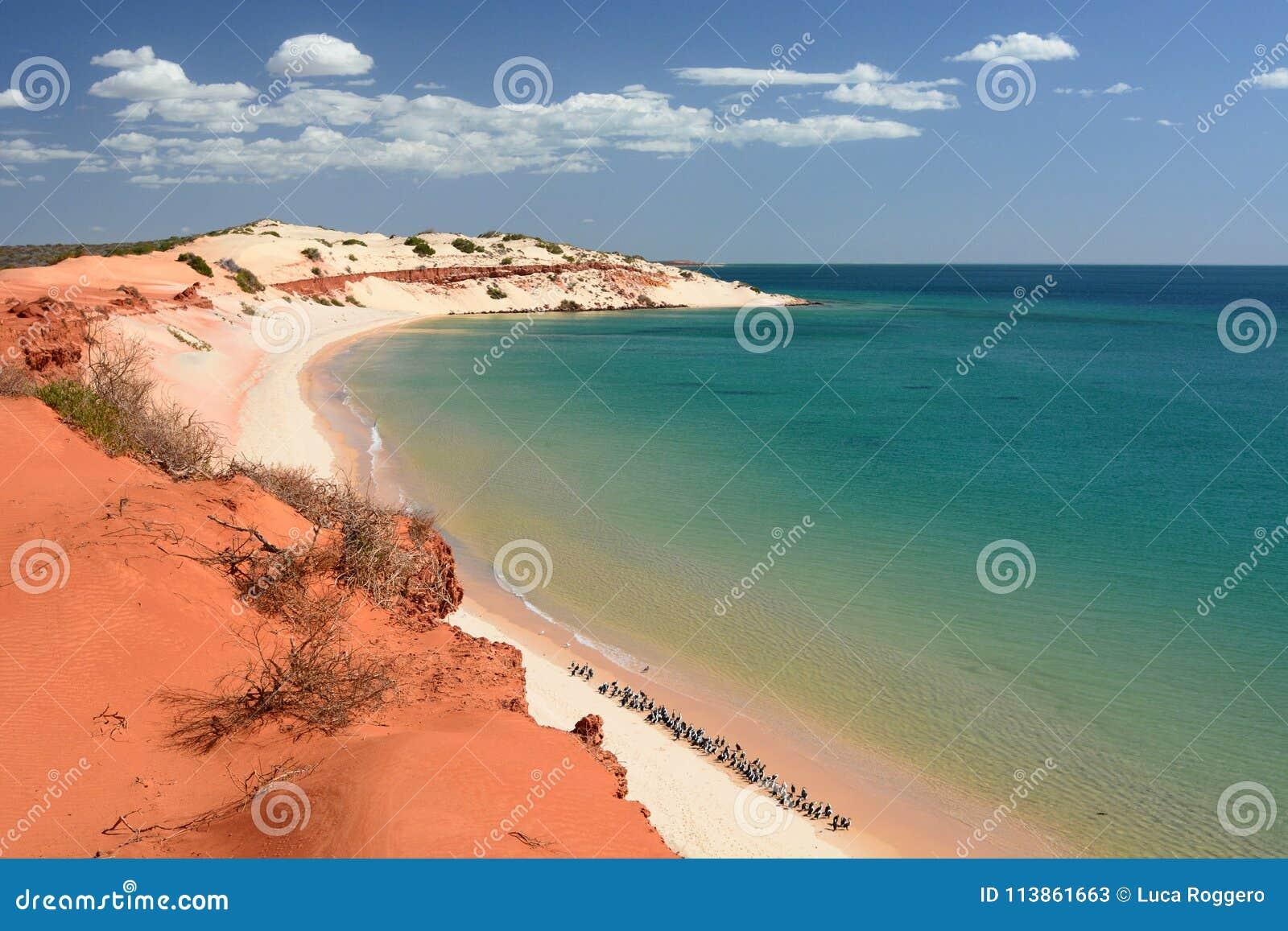 从海角庇隆的全景 François庇隆国家公园 鲨鱼湾 澳大利亚西部