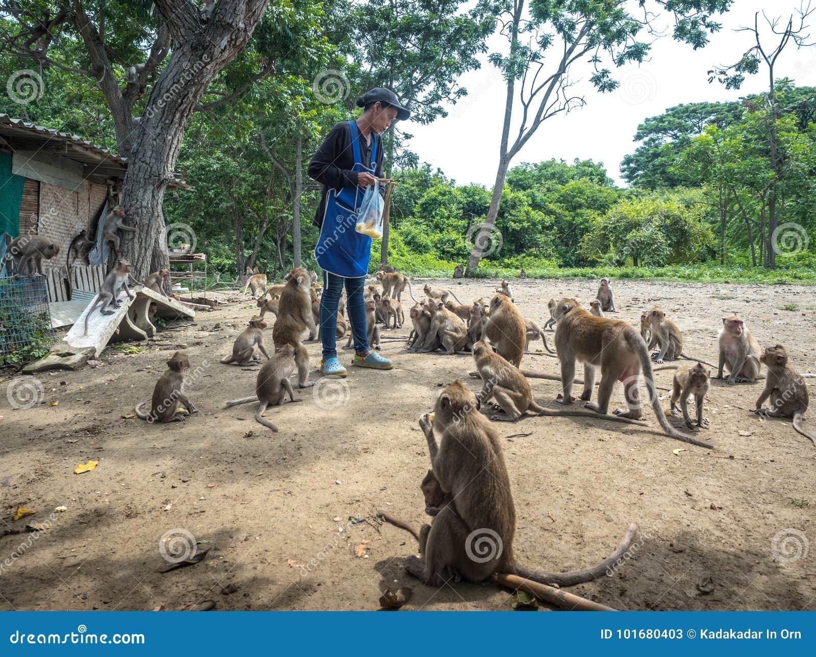 从给的人的猴子等待的玉米