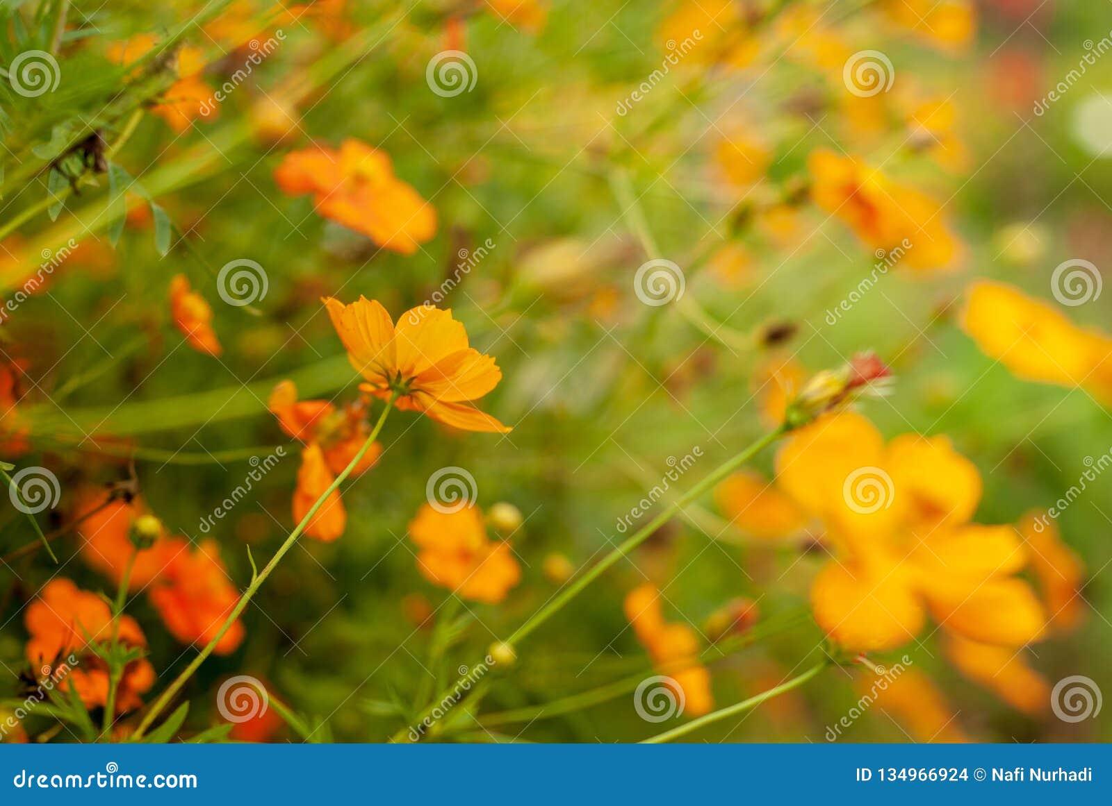 从花种植园的美好的bokeh作用