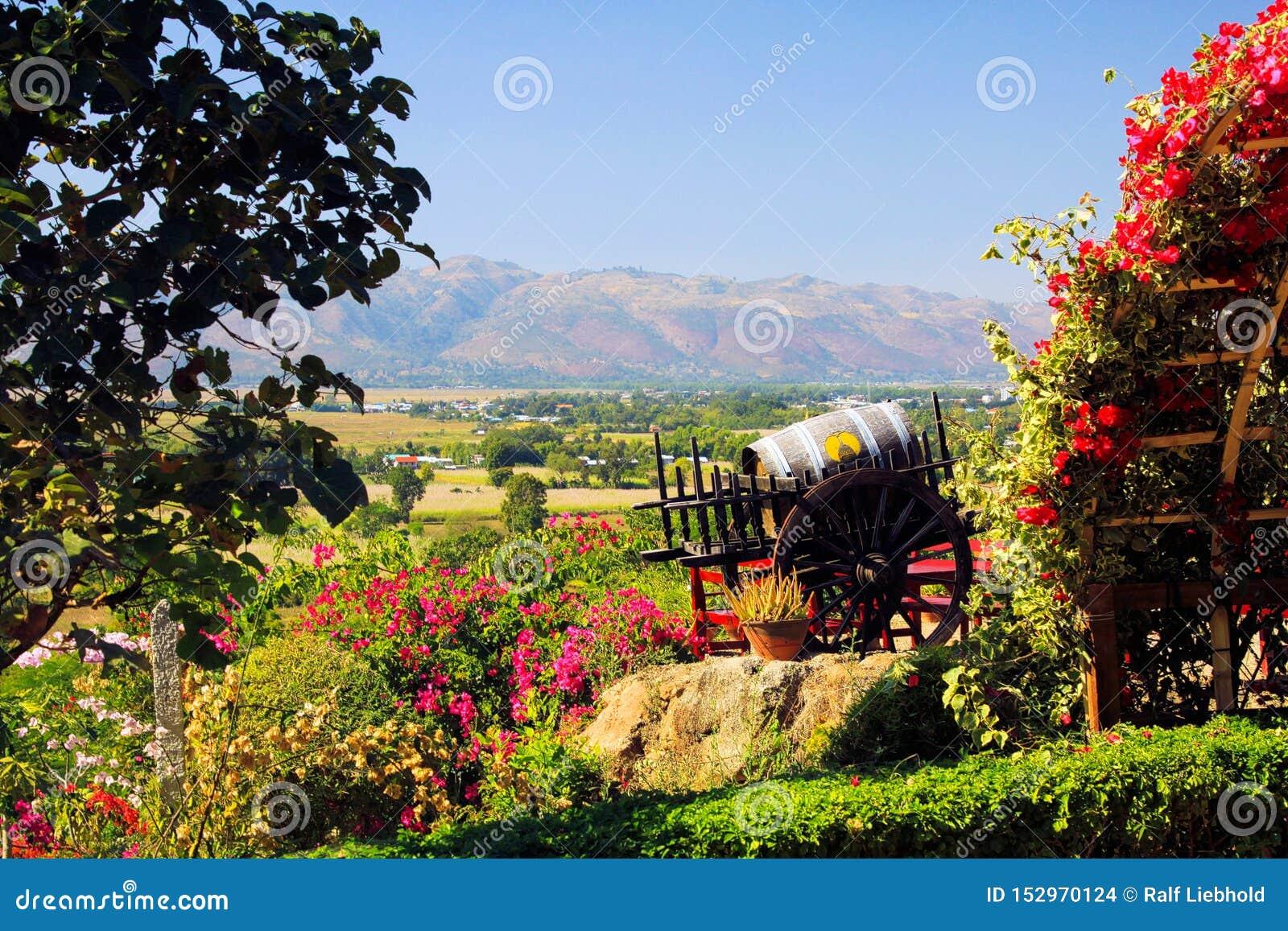 从葡萄园在小山上面在花之外和葡萄酒桶的全景到村庄Nyaungshwe和山脉里绿色山谷