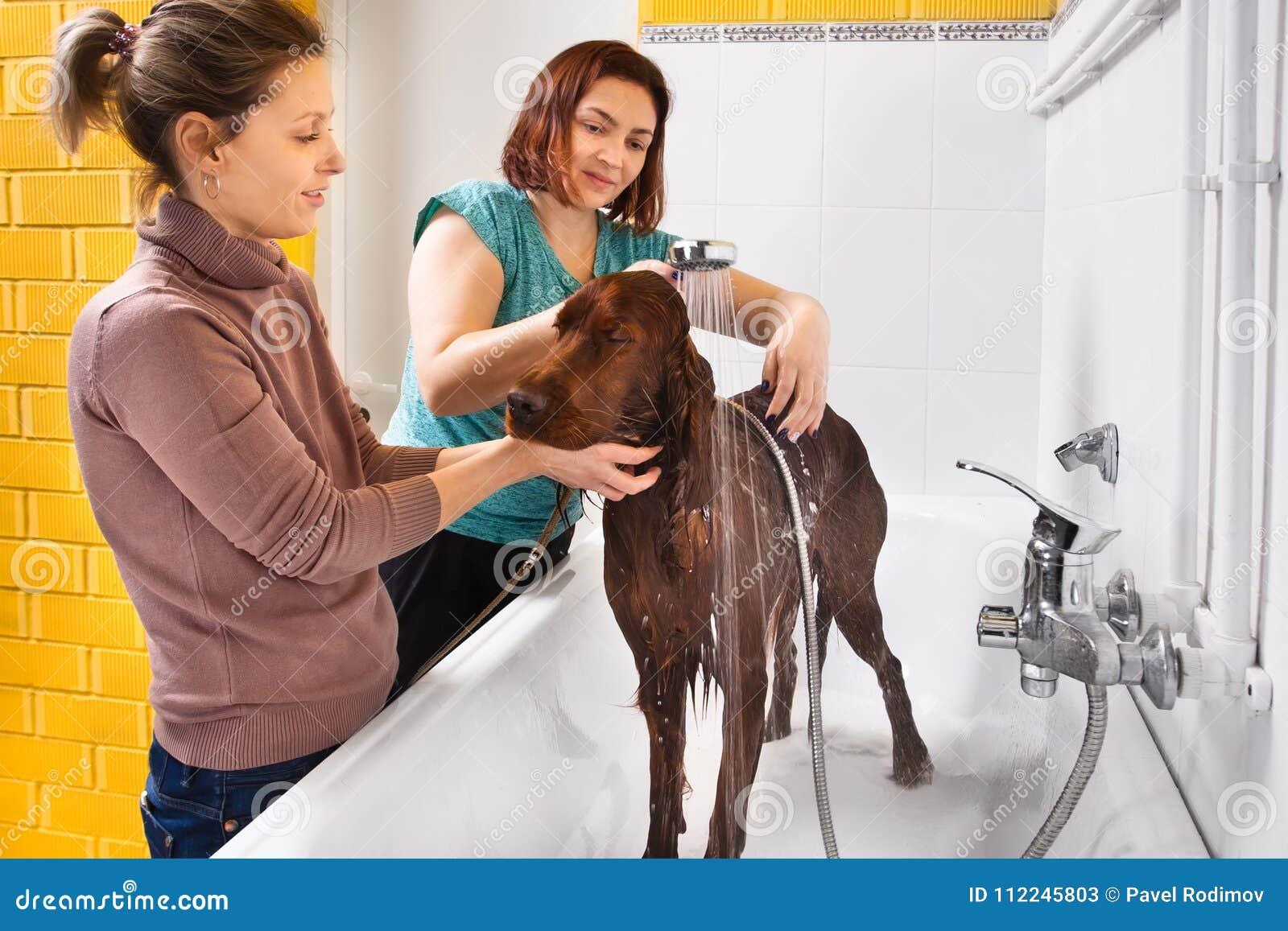 从阵雨的宠物groomer洗涤的狗