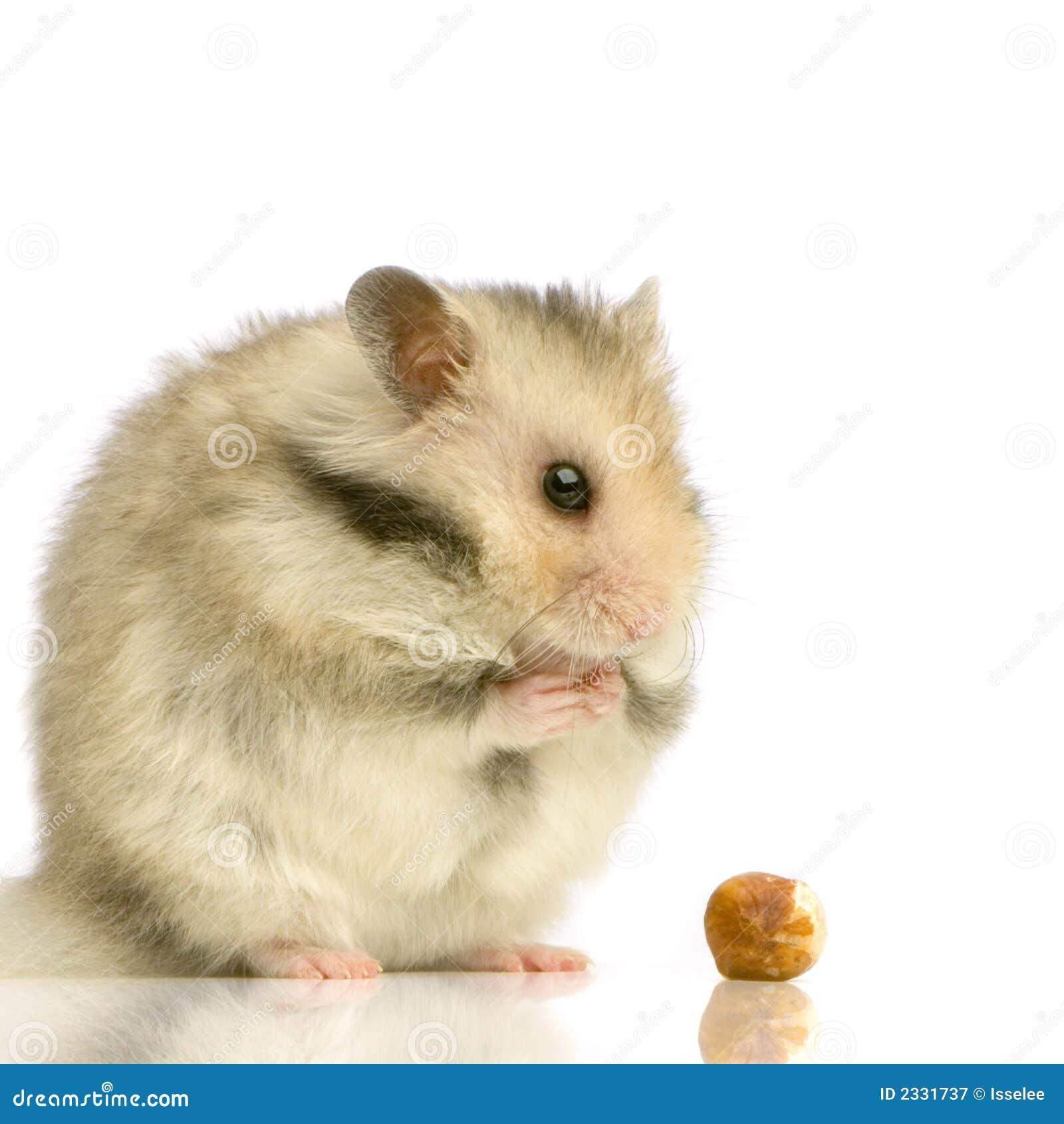 仓鼠4秘闻兔子图片