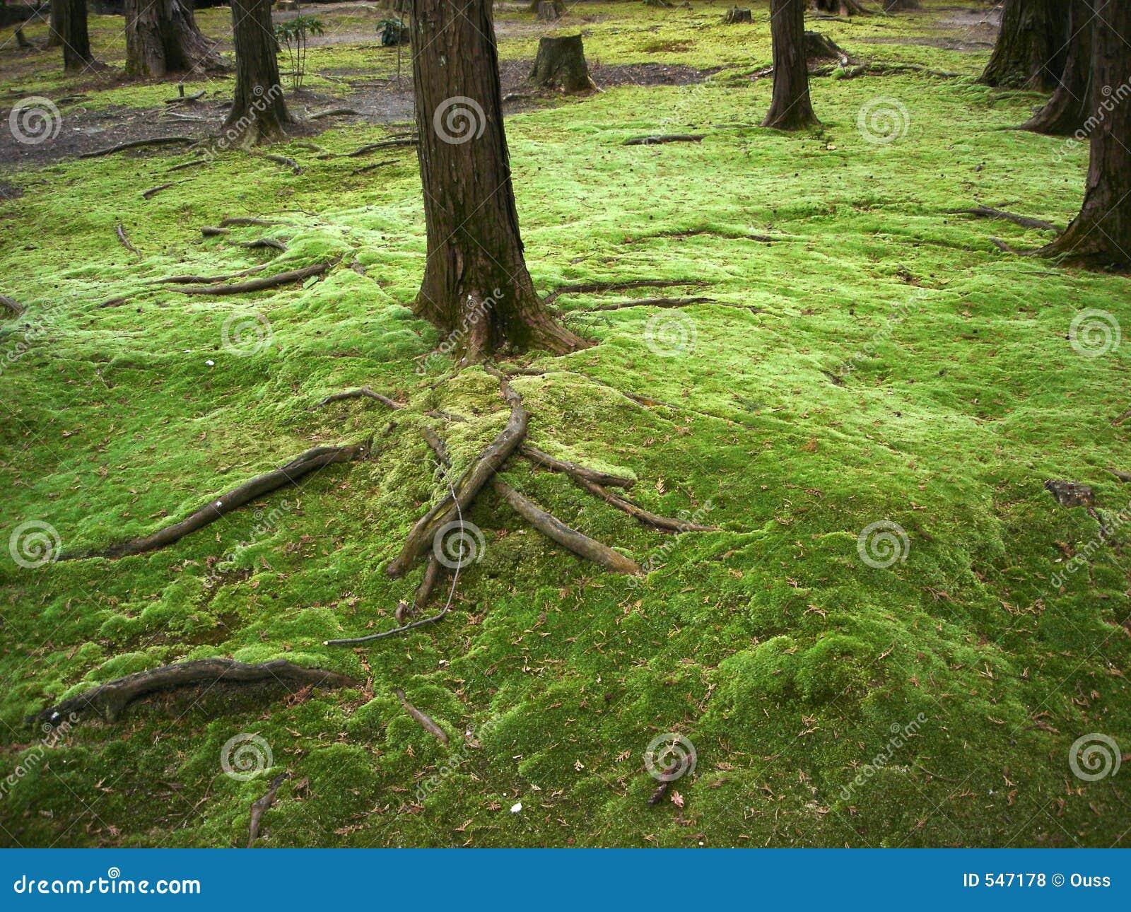 Download 仙境 库存照片. 图片 包括有 少见, 森林, 冬天, 的btu, 神奇, beautifuler, 传说, 庭院 - 547178