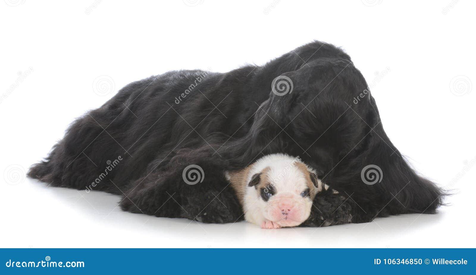 代孕妇被上升的孤立的小狗