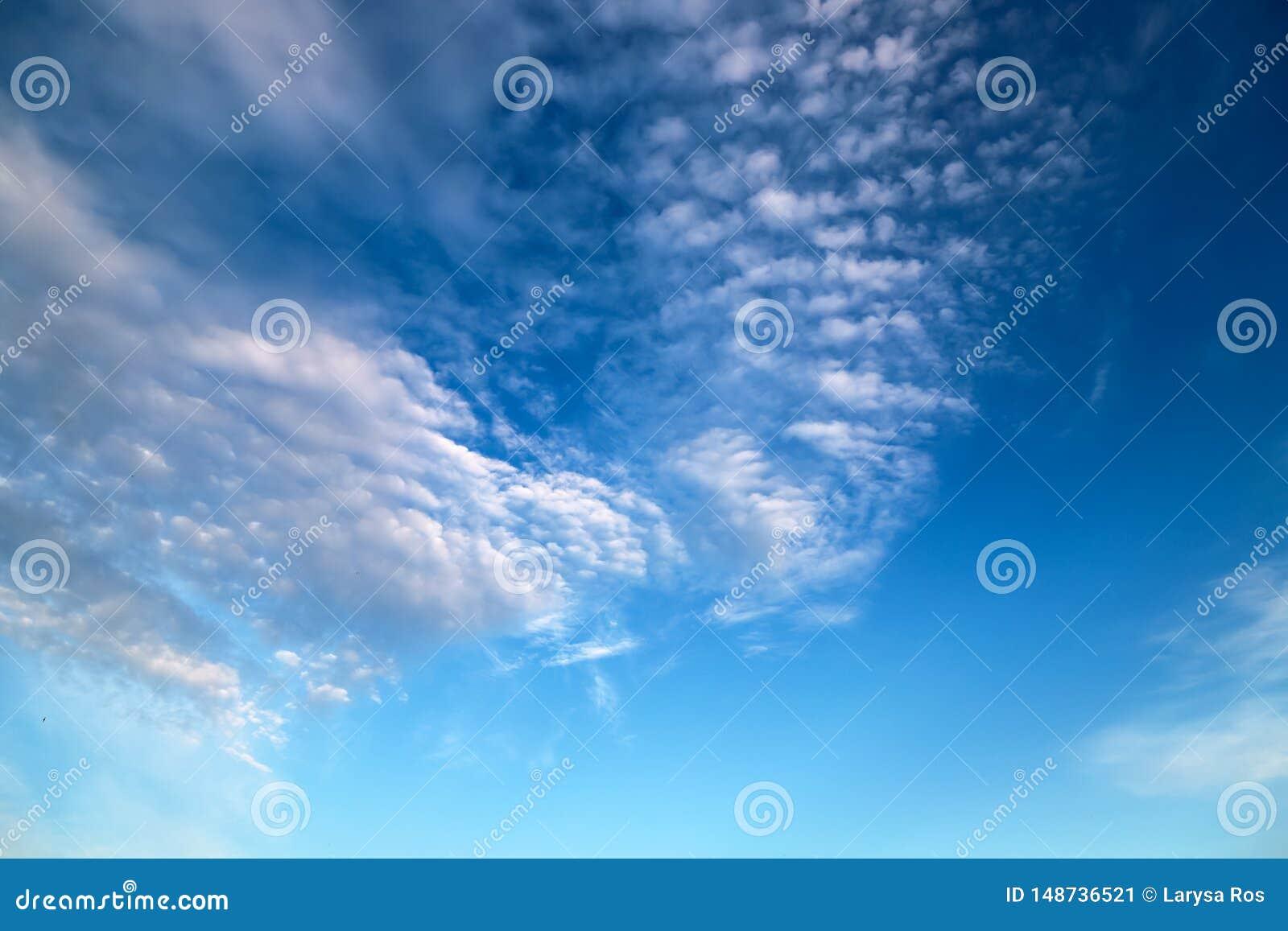 以花,积雨云,积云,反对天空蔚蓝的雨云的形式美丽的白色云彩 美丽如画