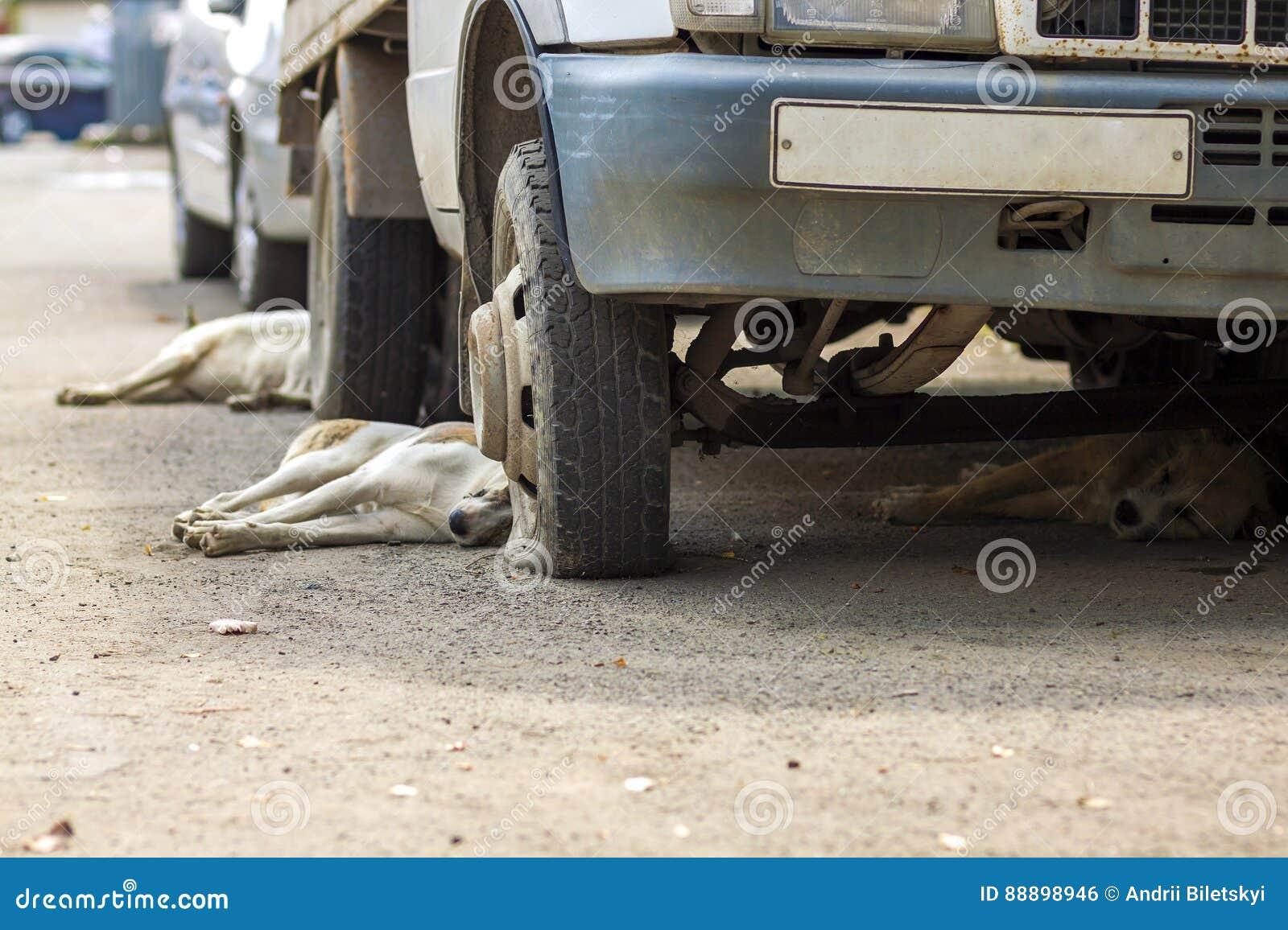 休息在有泄了气的轮胎的一辆老汽车下的狗