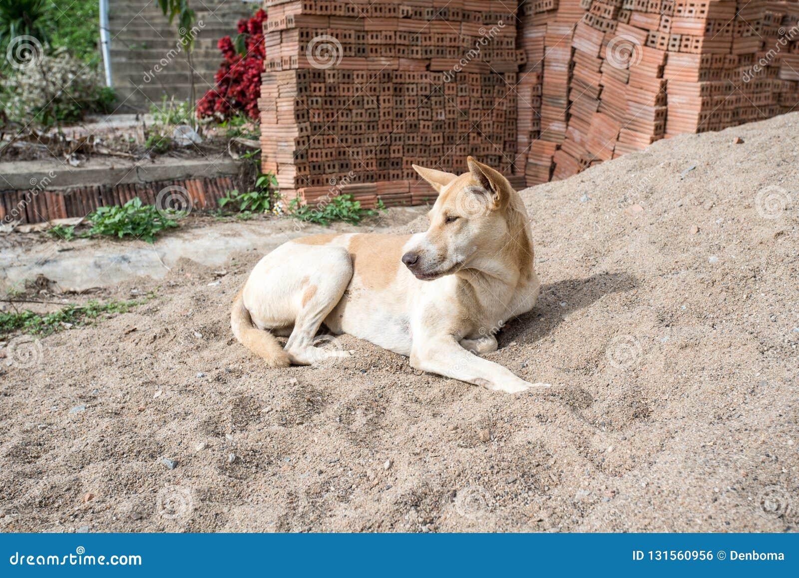 休息的狗在阳光下
